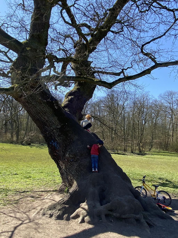 Bild: Kinder erklettern einen Baum