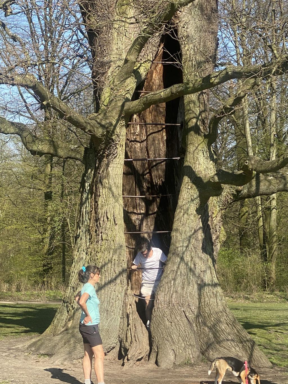 Bild: Baum zum Klettern