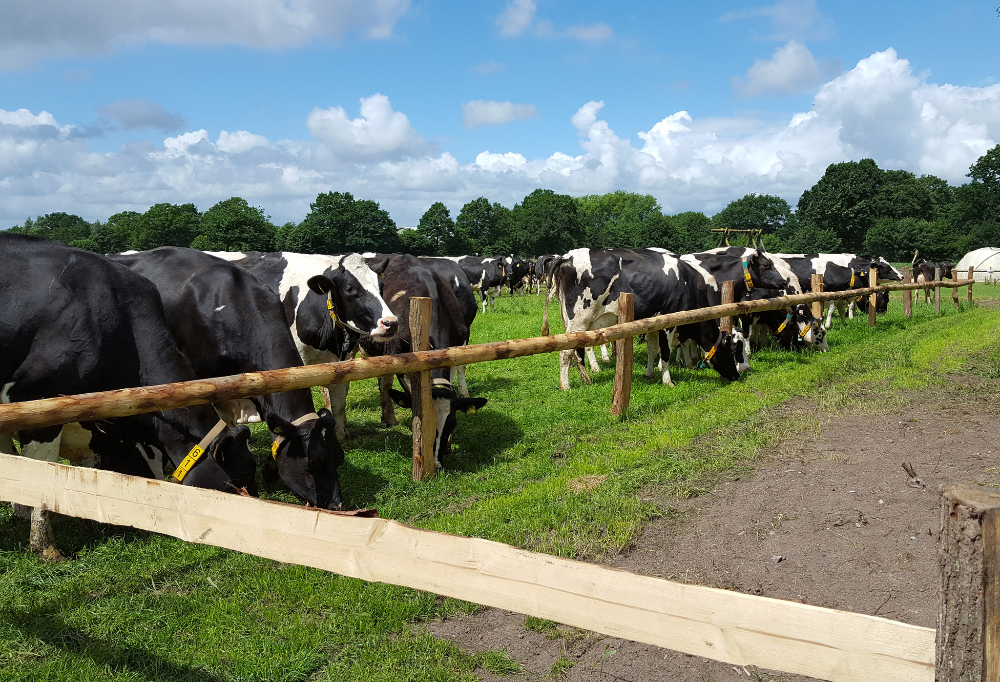 Besuchen Sie die Kühe an der Weide.
