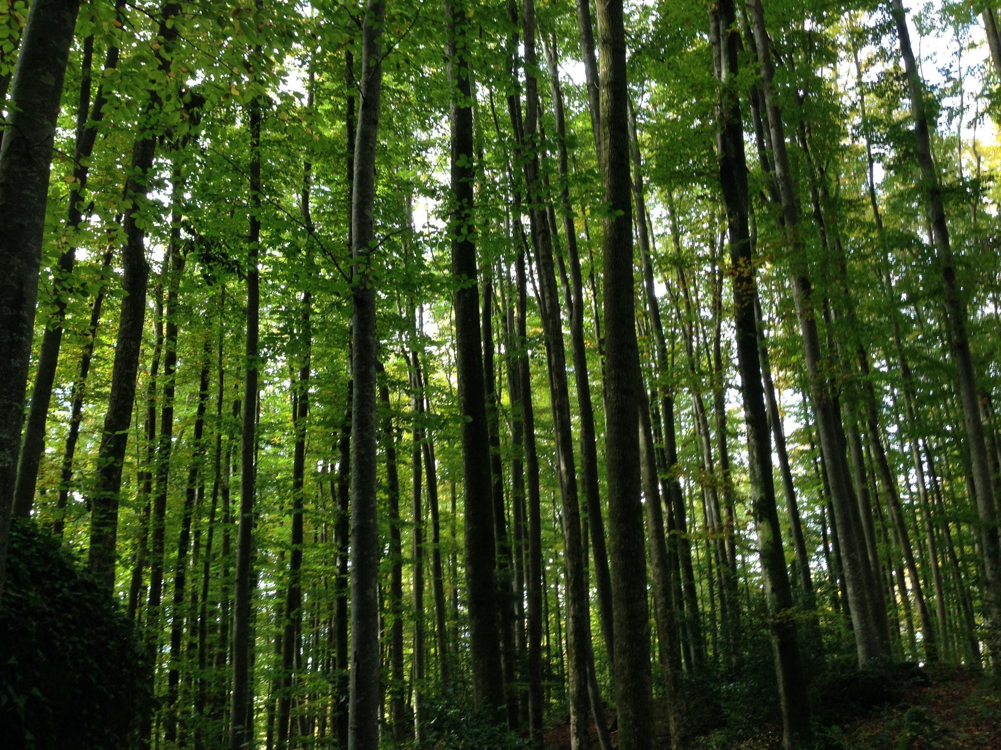 1 Hektare eigener Wald, Fällen und Transportieren