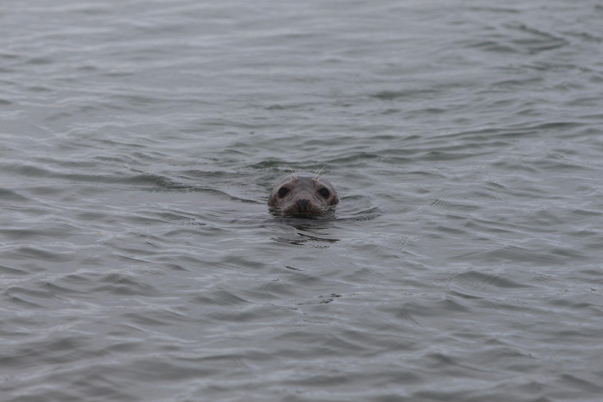 Robben zum Greifen nahe