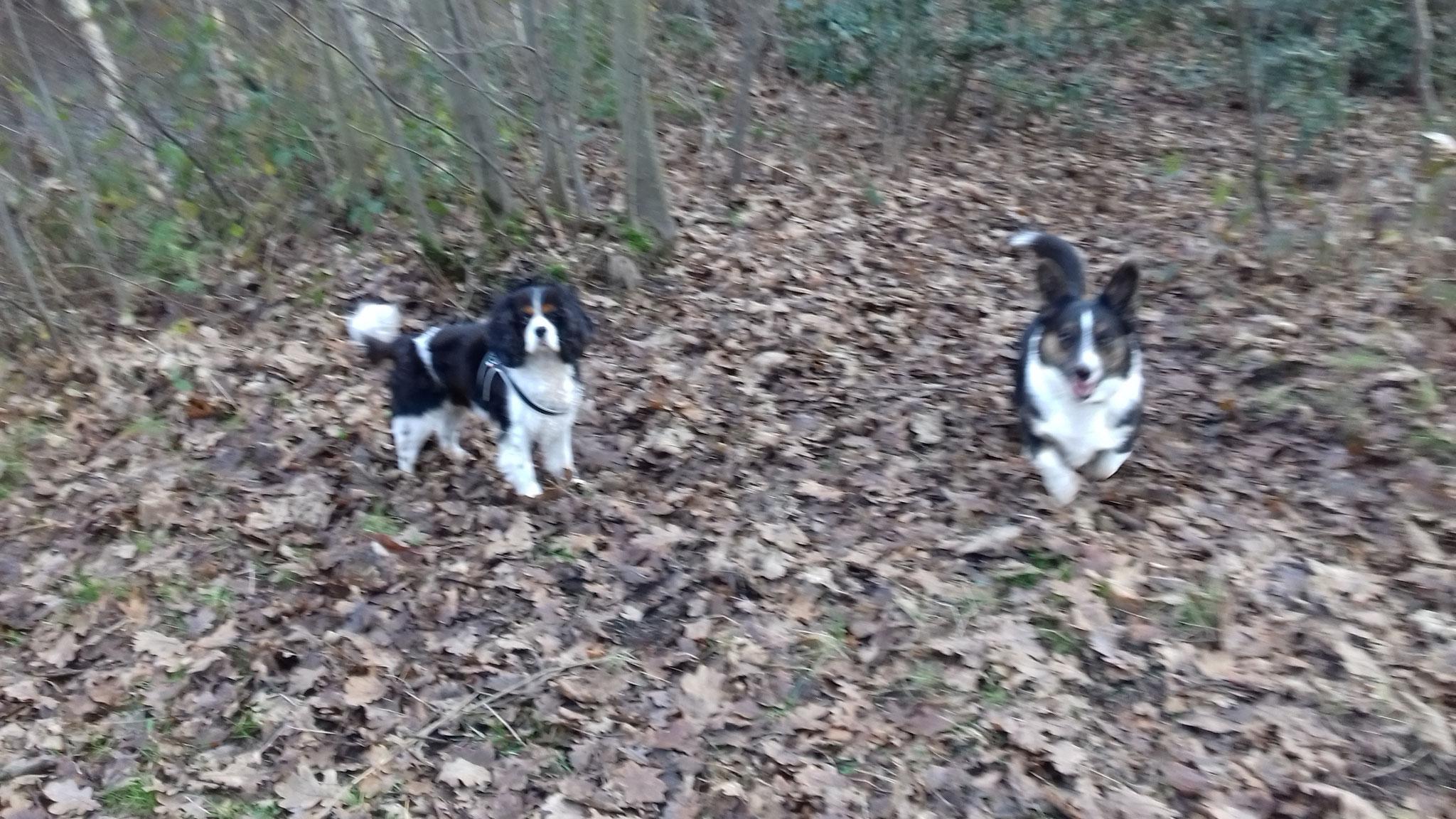 Feline & Jill - December