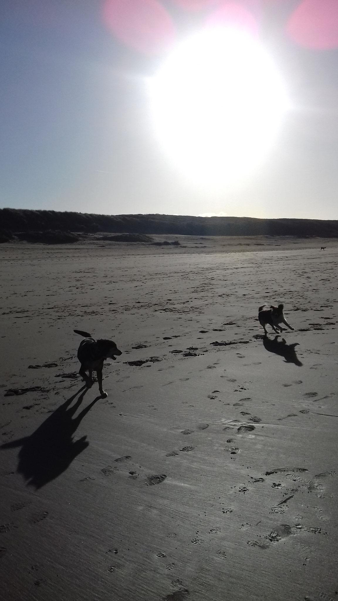 Astor op het strand - Januari