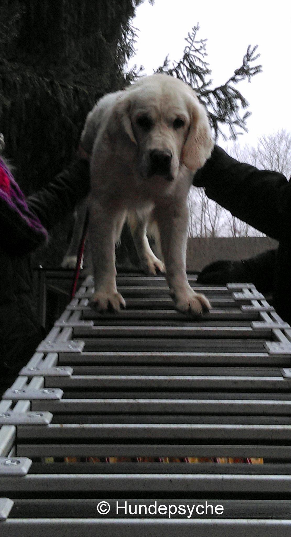 Leiter nach unten