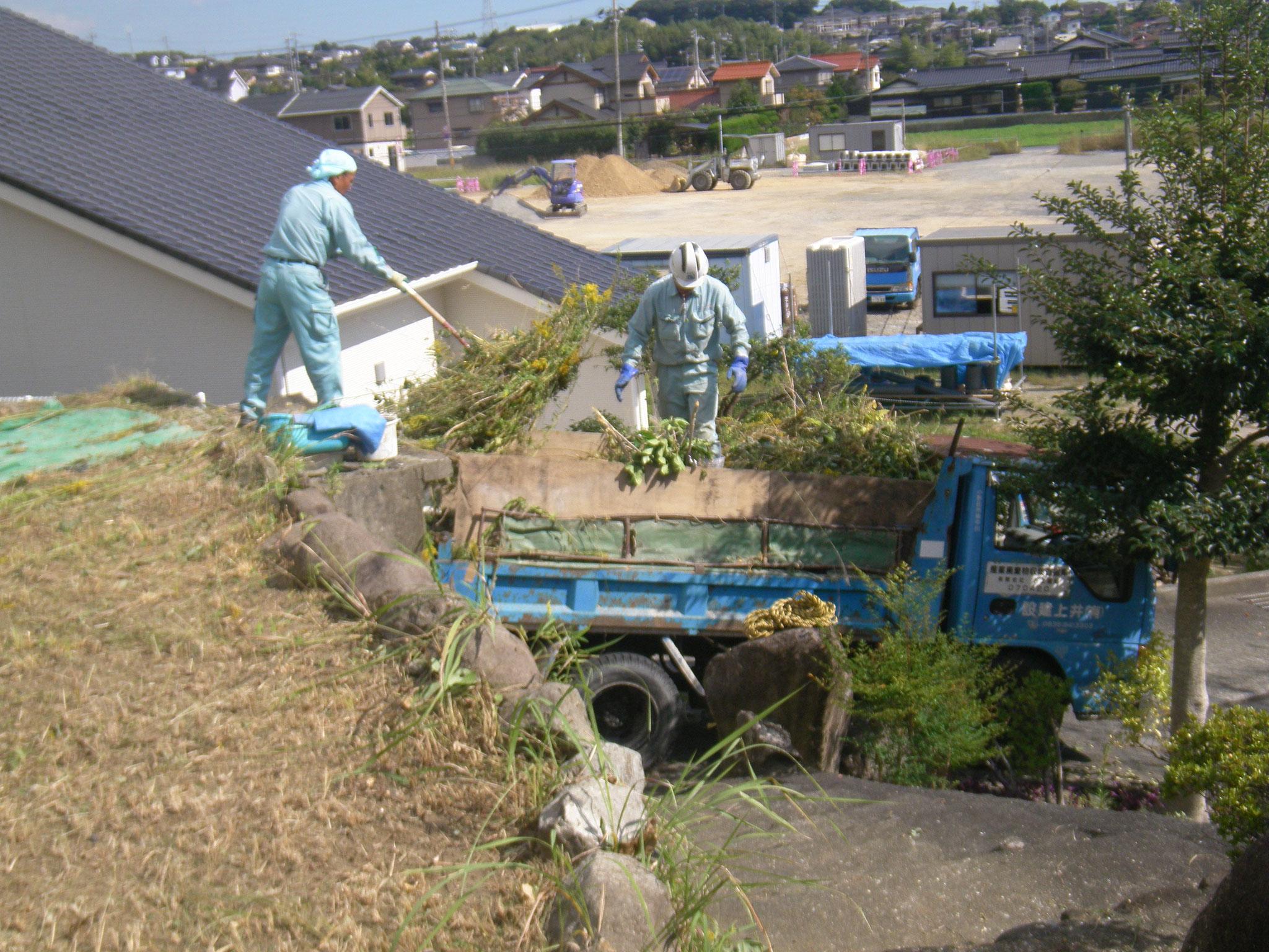 集積した草をダンプに積んで処分します。