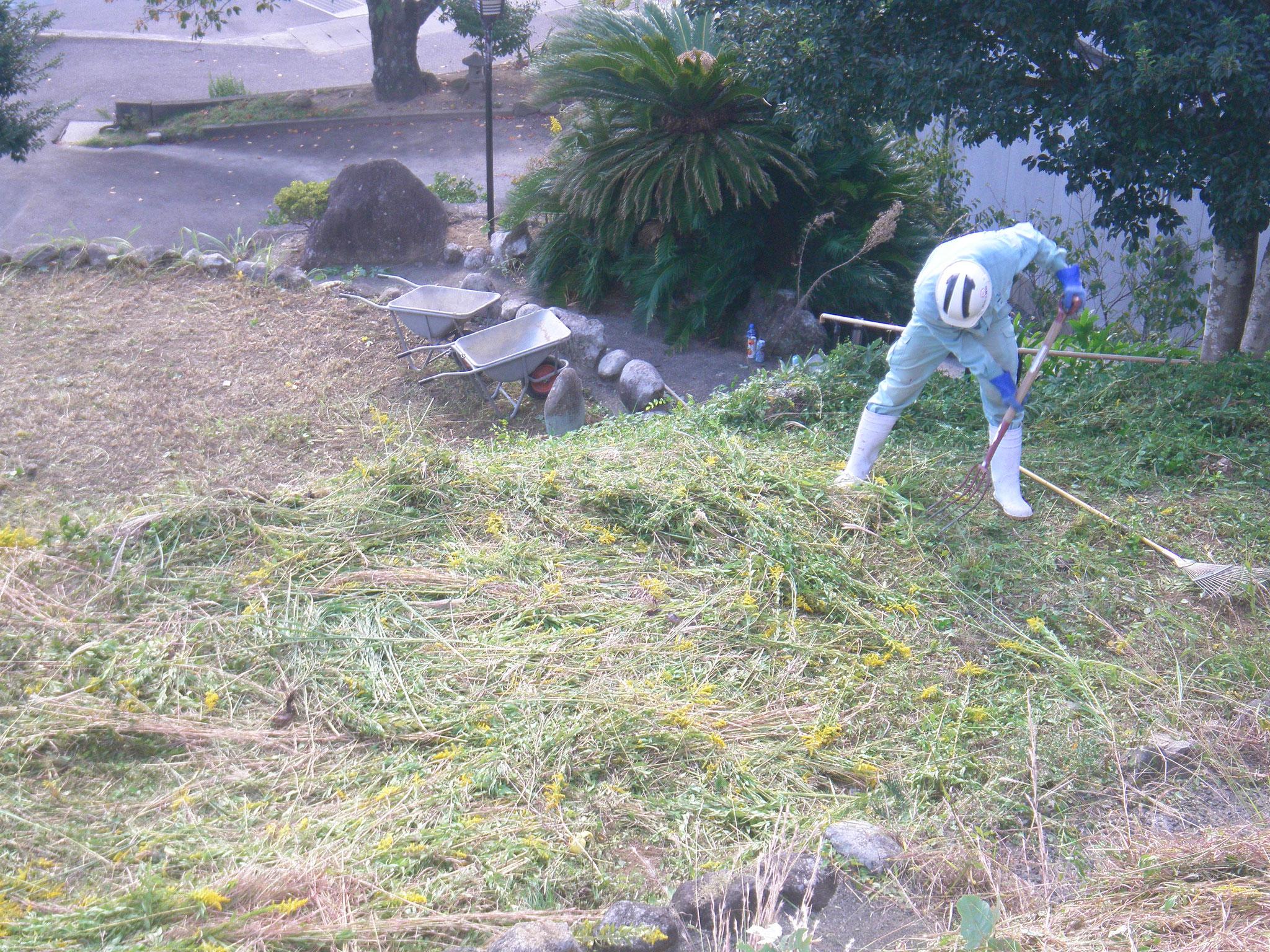 フォークやがんぜきで草を集積します。