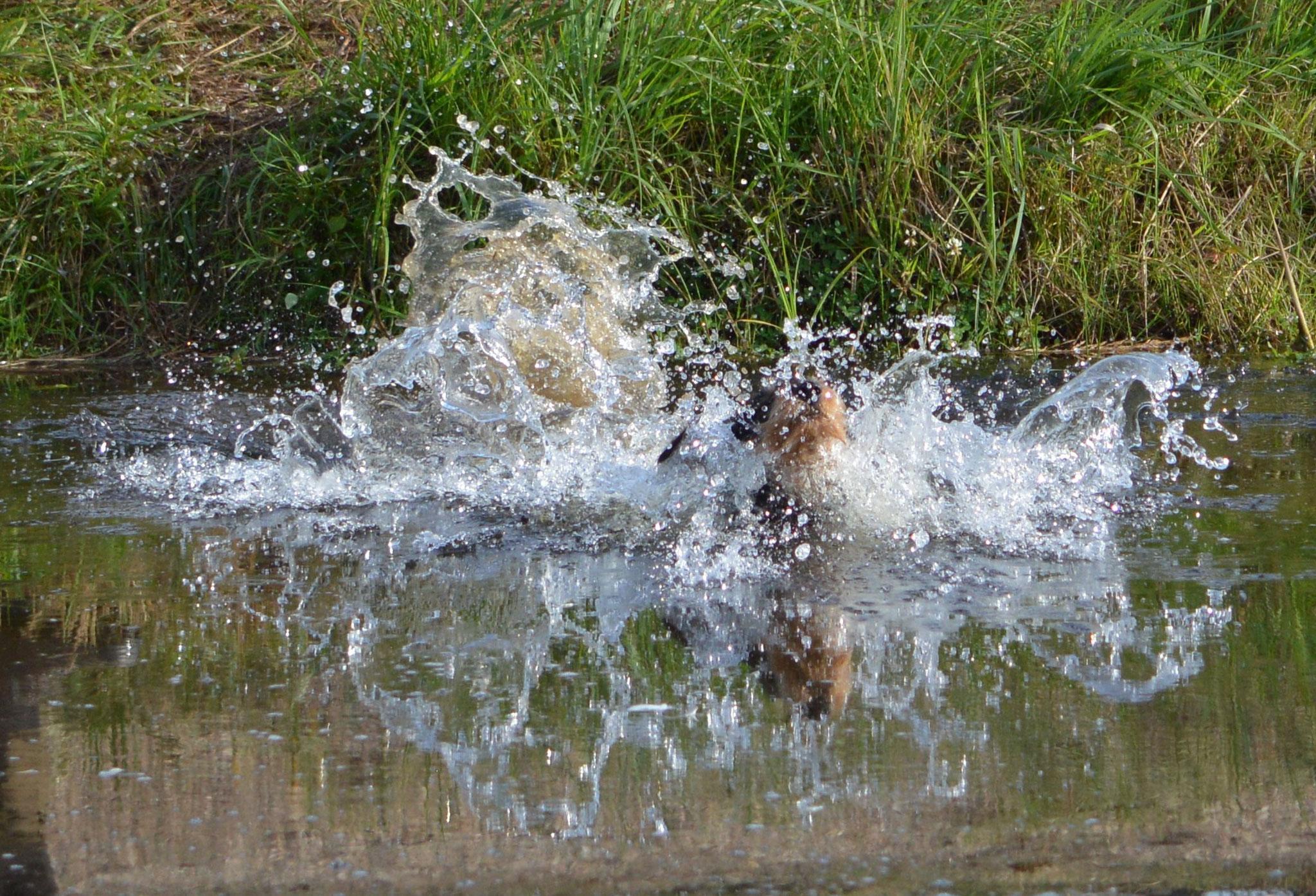 Wasserfreude
