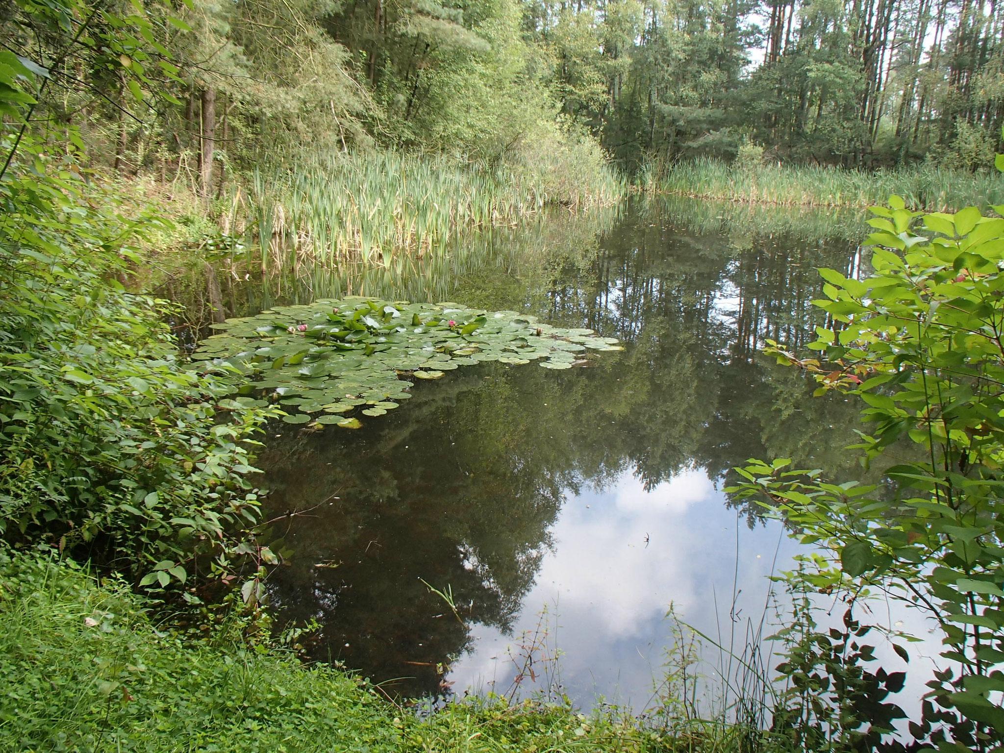 01 An diesem idyllischen Gewässer wollen wir unseren Wassertest durchführen.