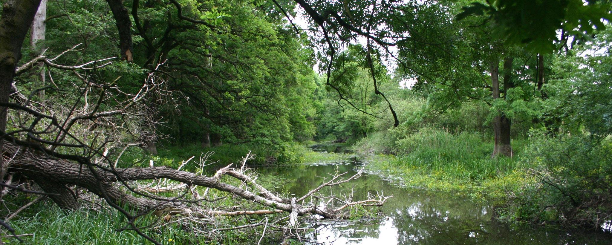 Blog: gedachten over de herstelkracht en veelzijdigheid van de natuur..