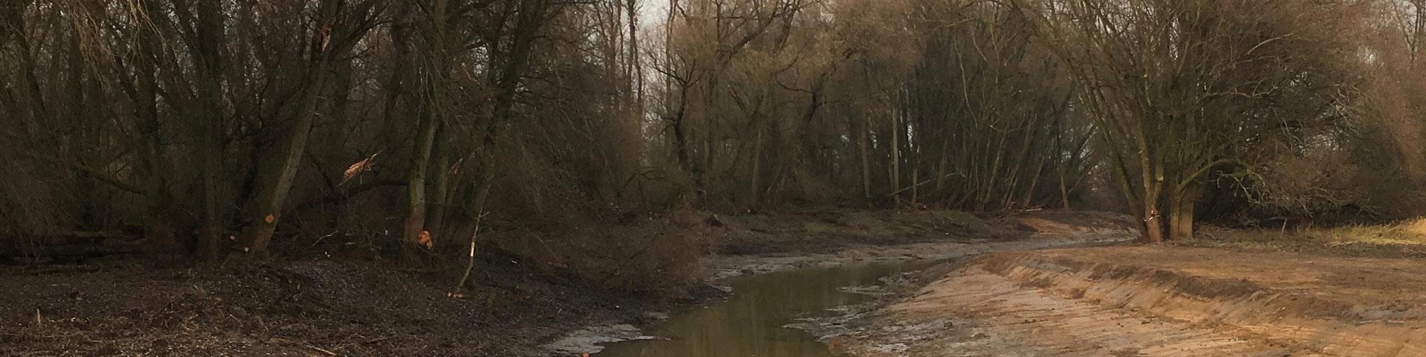 Katerstede Welsum; nevengeul volgt tracé door ooibos (2016)
