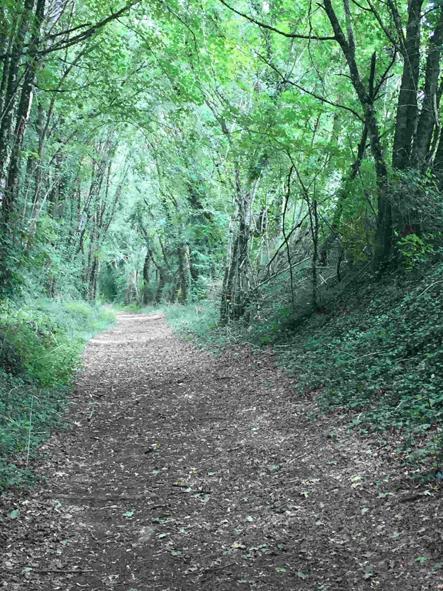 Chemin ombragé.