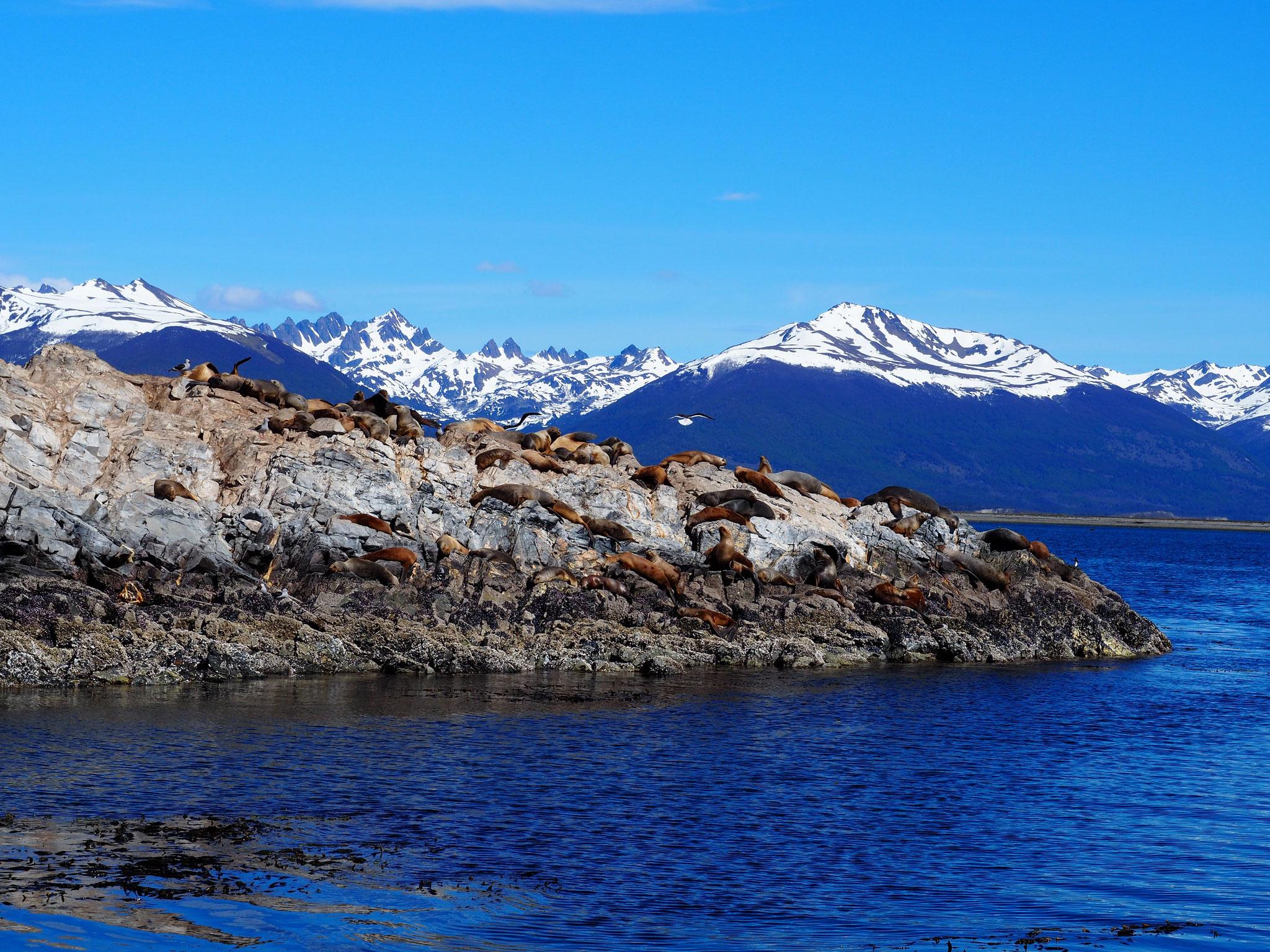 Der Felsen der Seelöwen