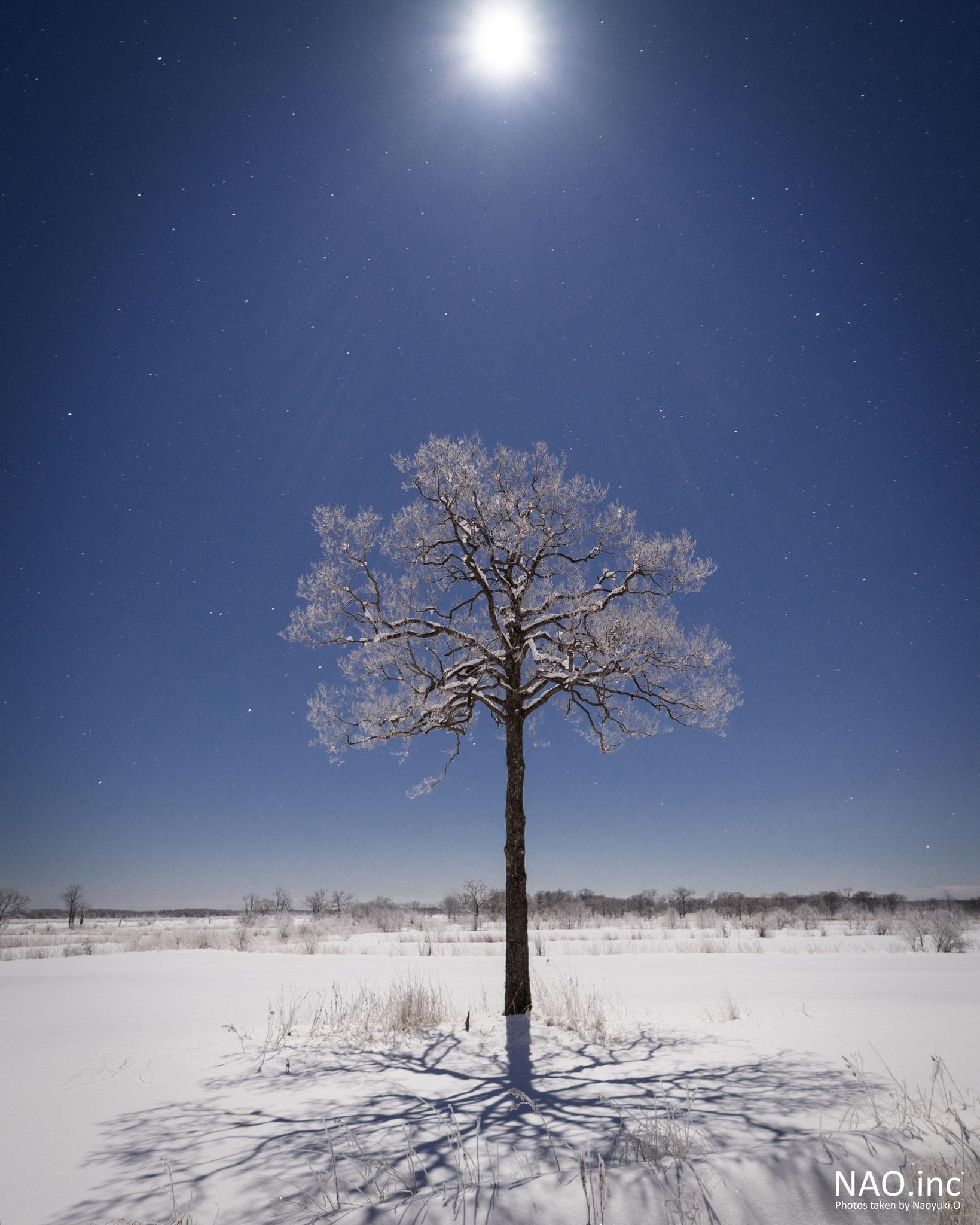 星のなる木。霧氷を月が照らして煌めく。