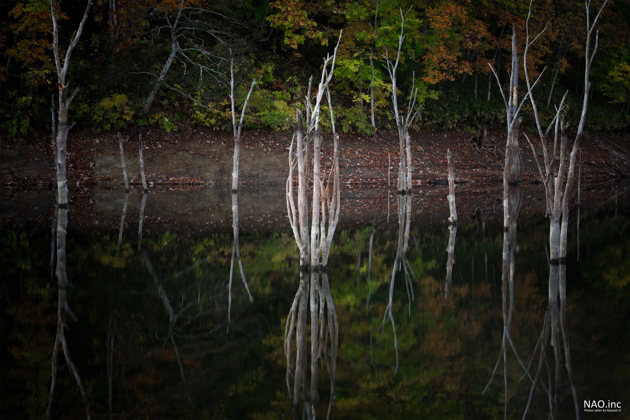 赤井川村落合ダム。ろうそくの炎のようなシルエットの枯れ木。紅葉を照らしているようだ。