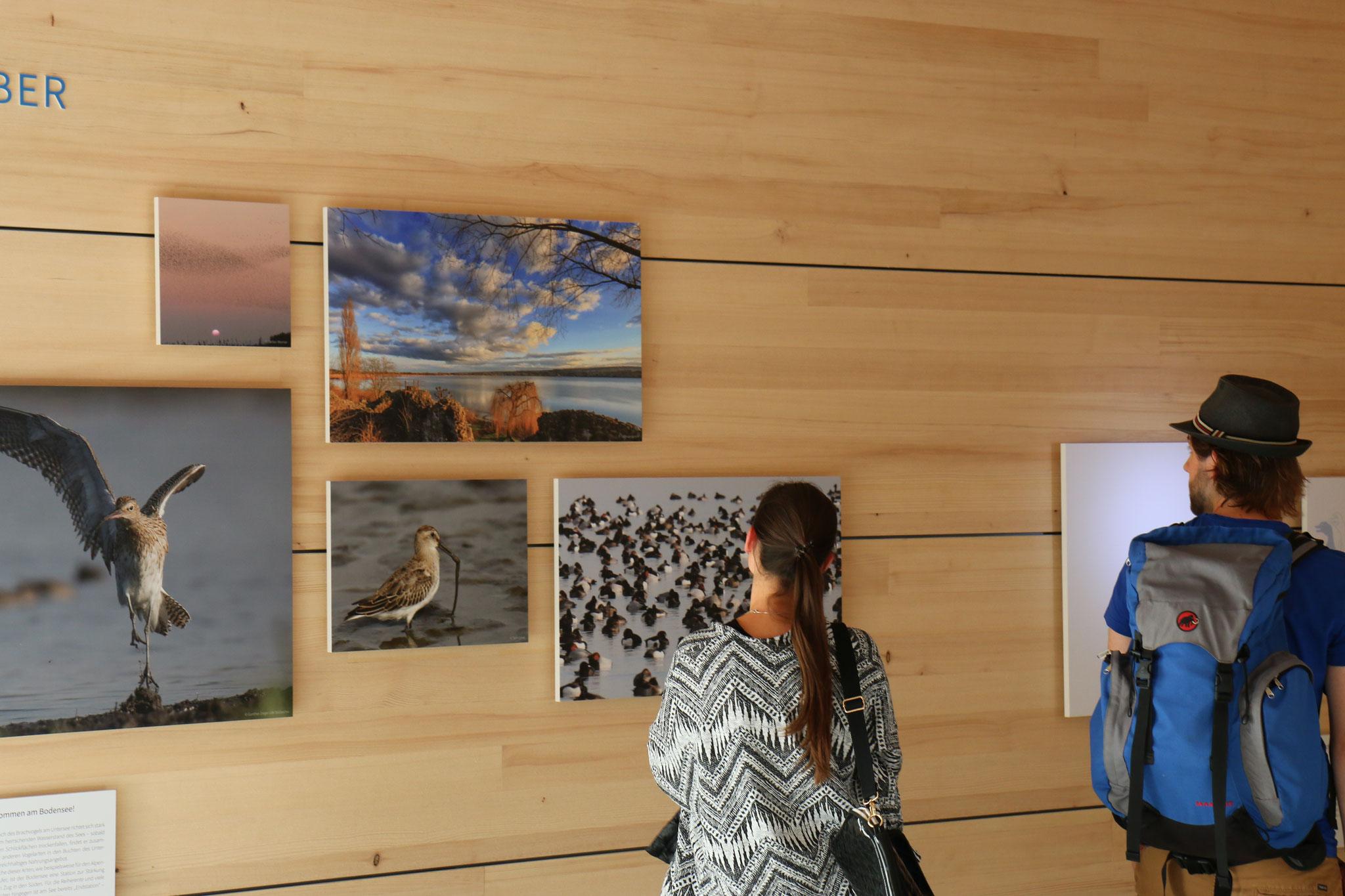 Impressionen der Ausstellung - Foto: NABU/H. Schweikardt