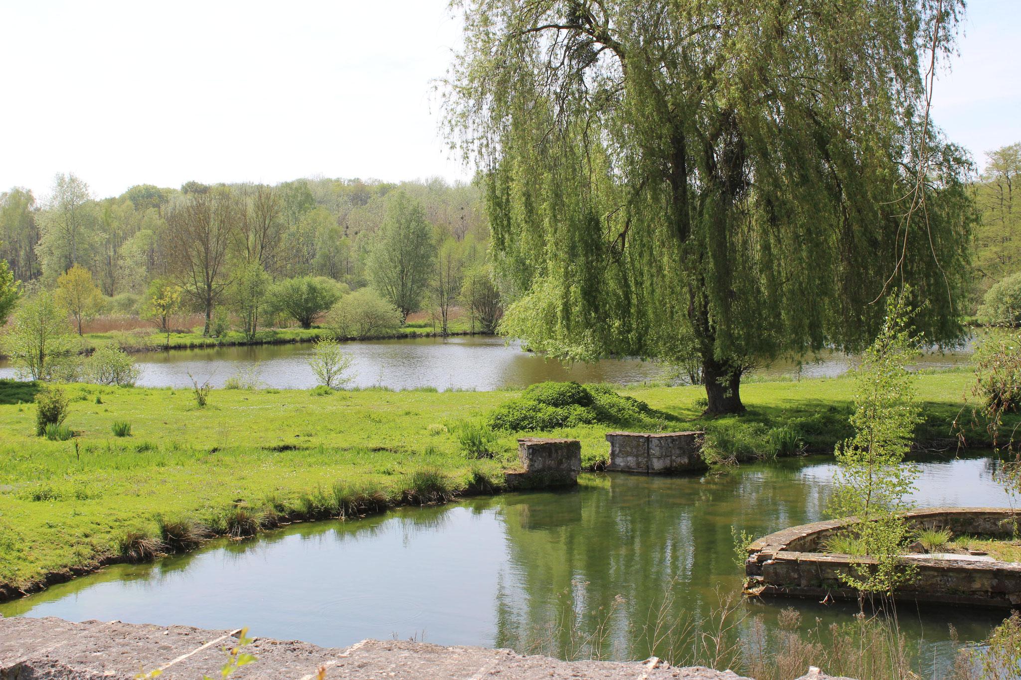 Étangs de Lieu-Restauré © OT du Pays de Valois