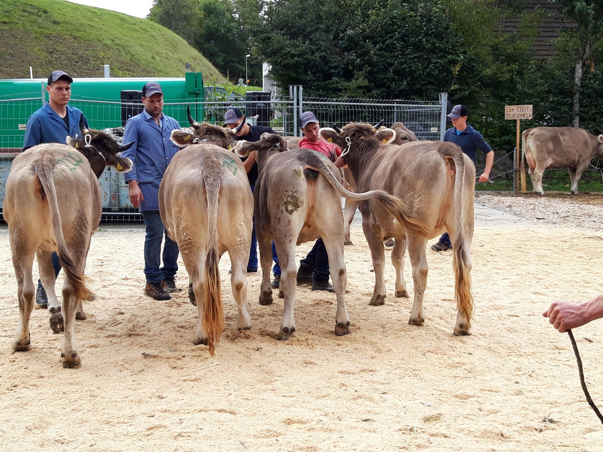 Abteilung Jüngere Rinder: 1. Harlei Urania , 3. Gregori Gina , 4. Lorento Tina von Duss Martin (v. r.)