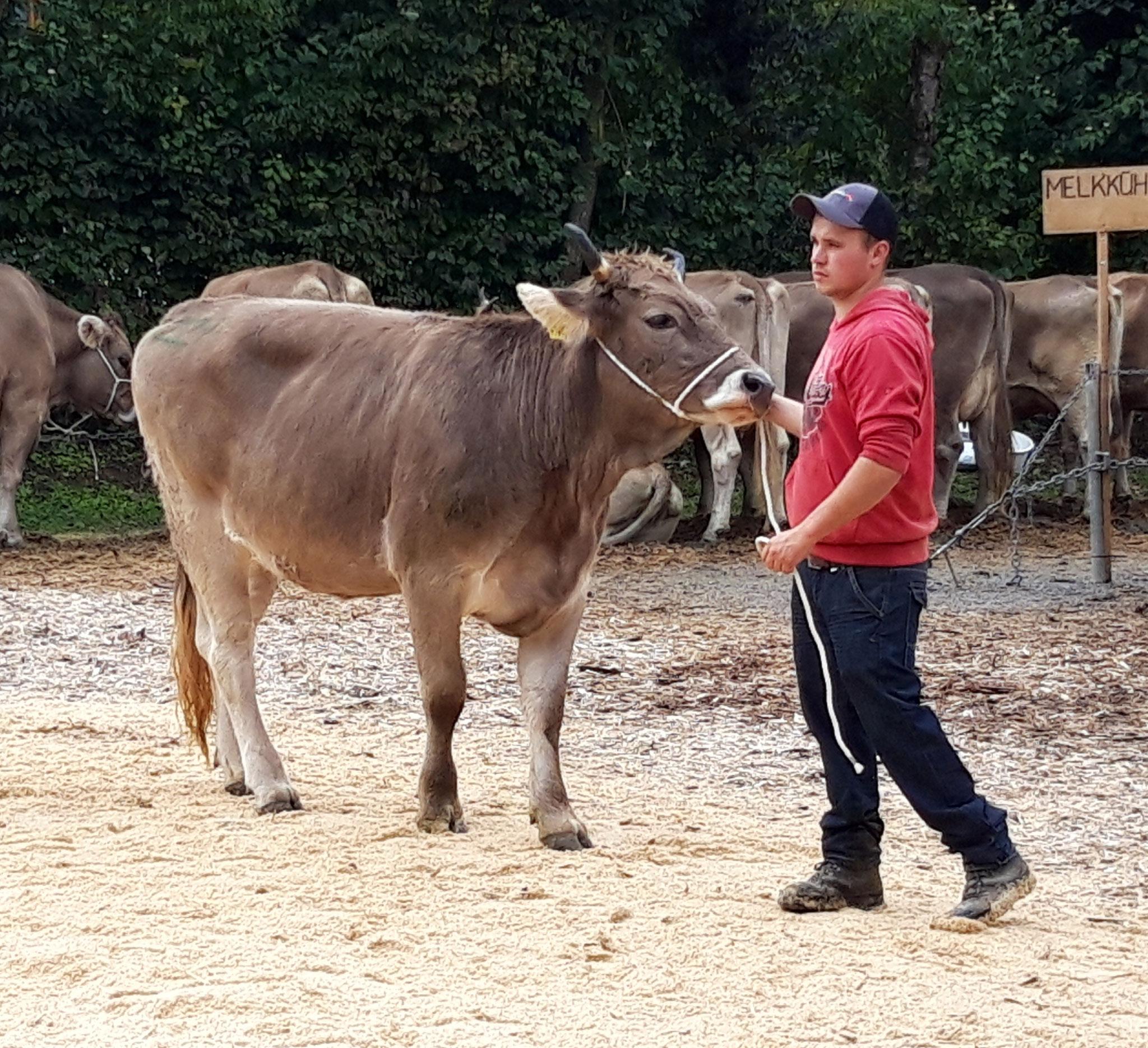 Siegerin Jüngere Rinder, Harlei Urania