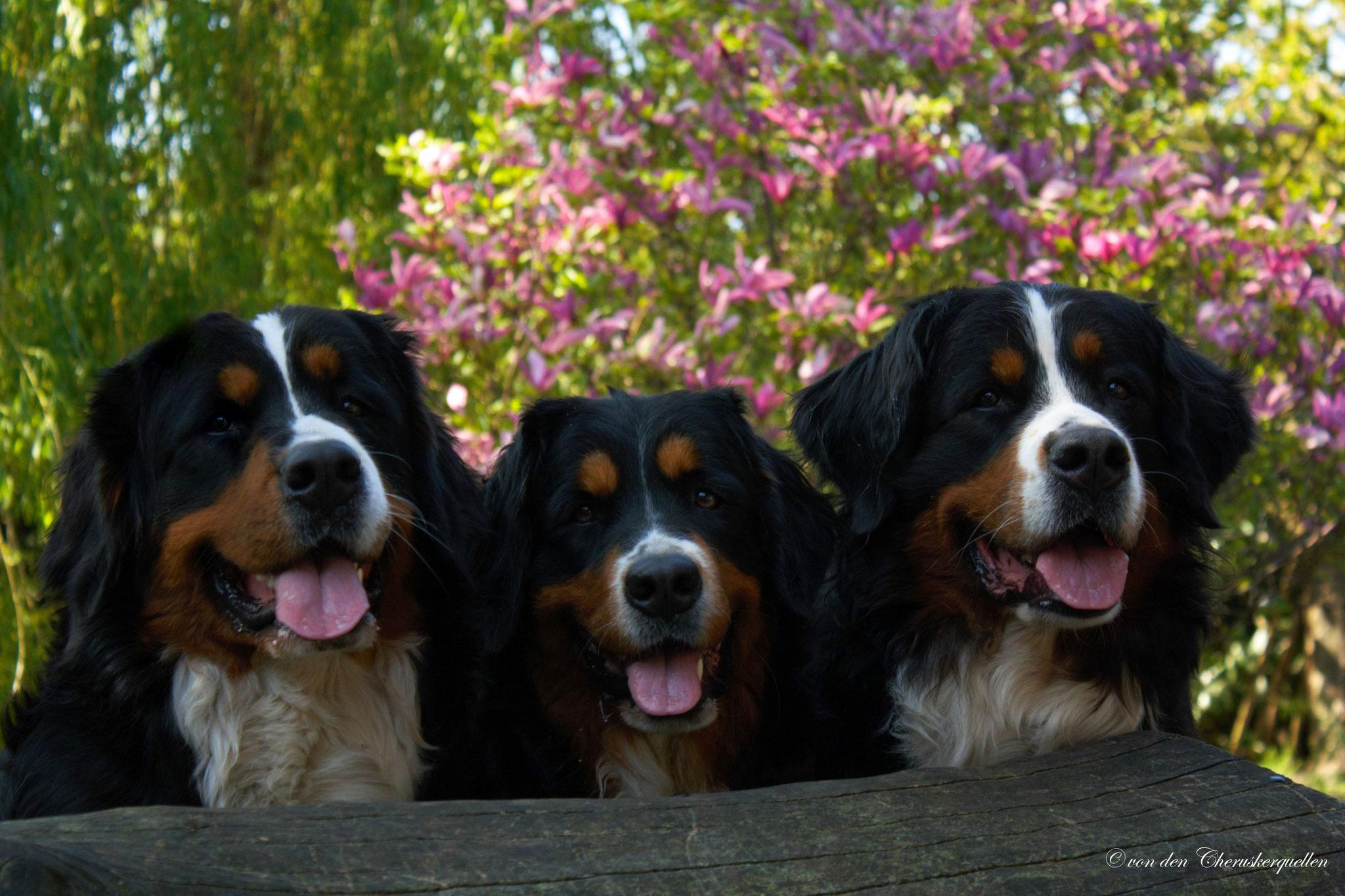 Unsere drei Mädels - v.l.n.r. Athena, Anouk und ihre Mama Gucci :-)