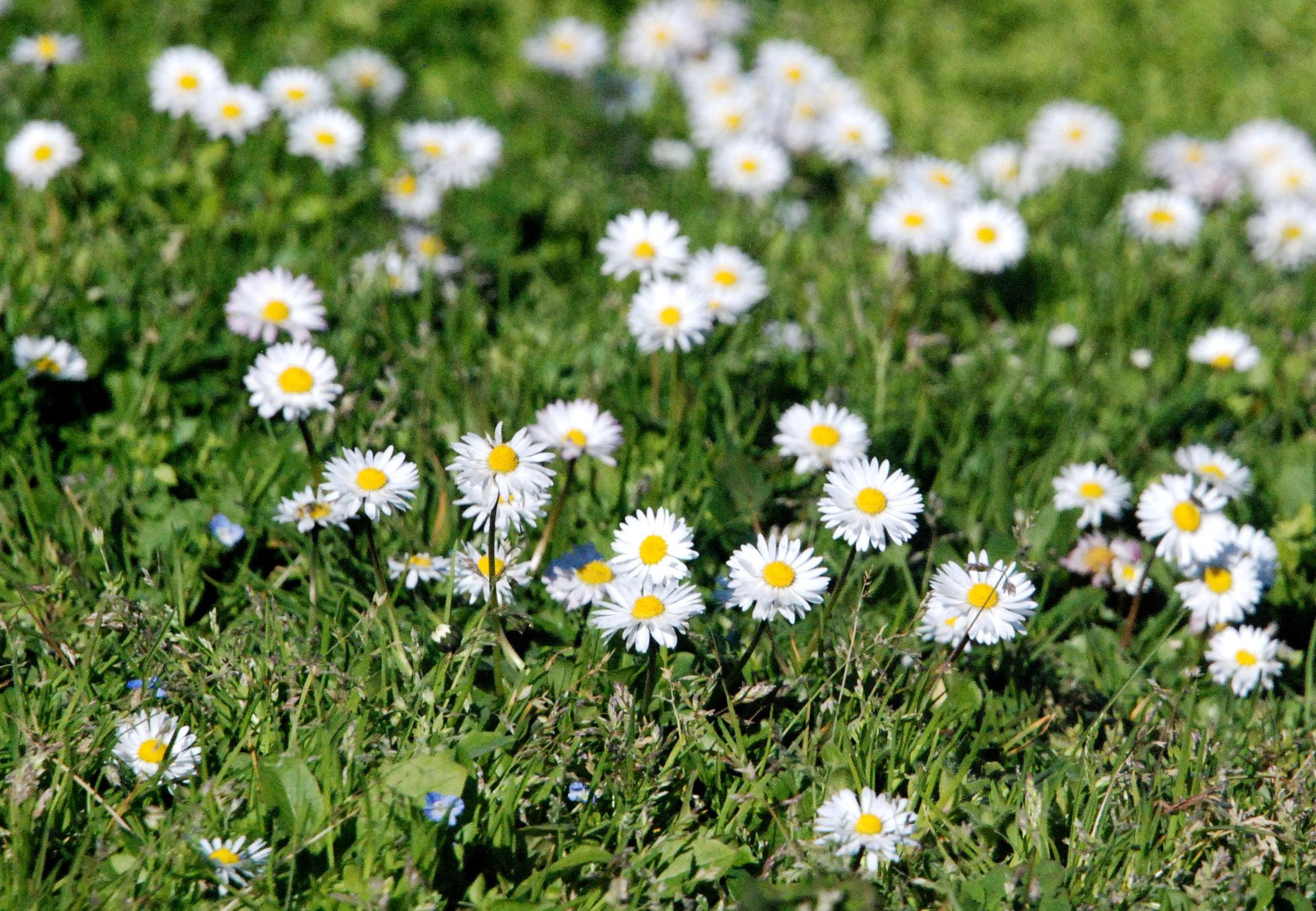 Bild 30 - Frühlingsliebe
