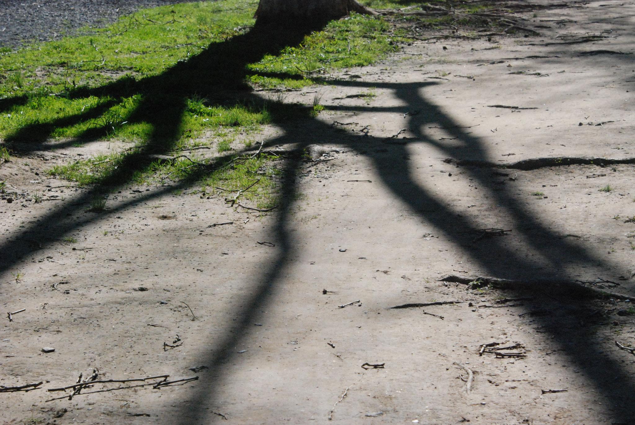 Bild 19 - Schatten werden kürzer