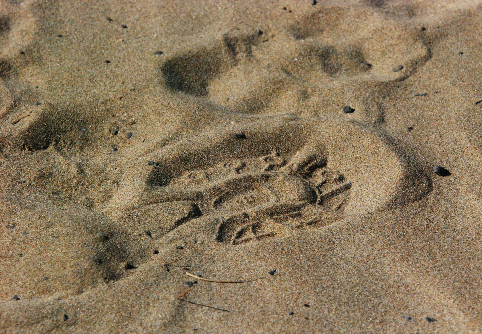 Bild 22 - Schuhgrösse 43
