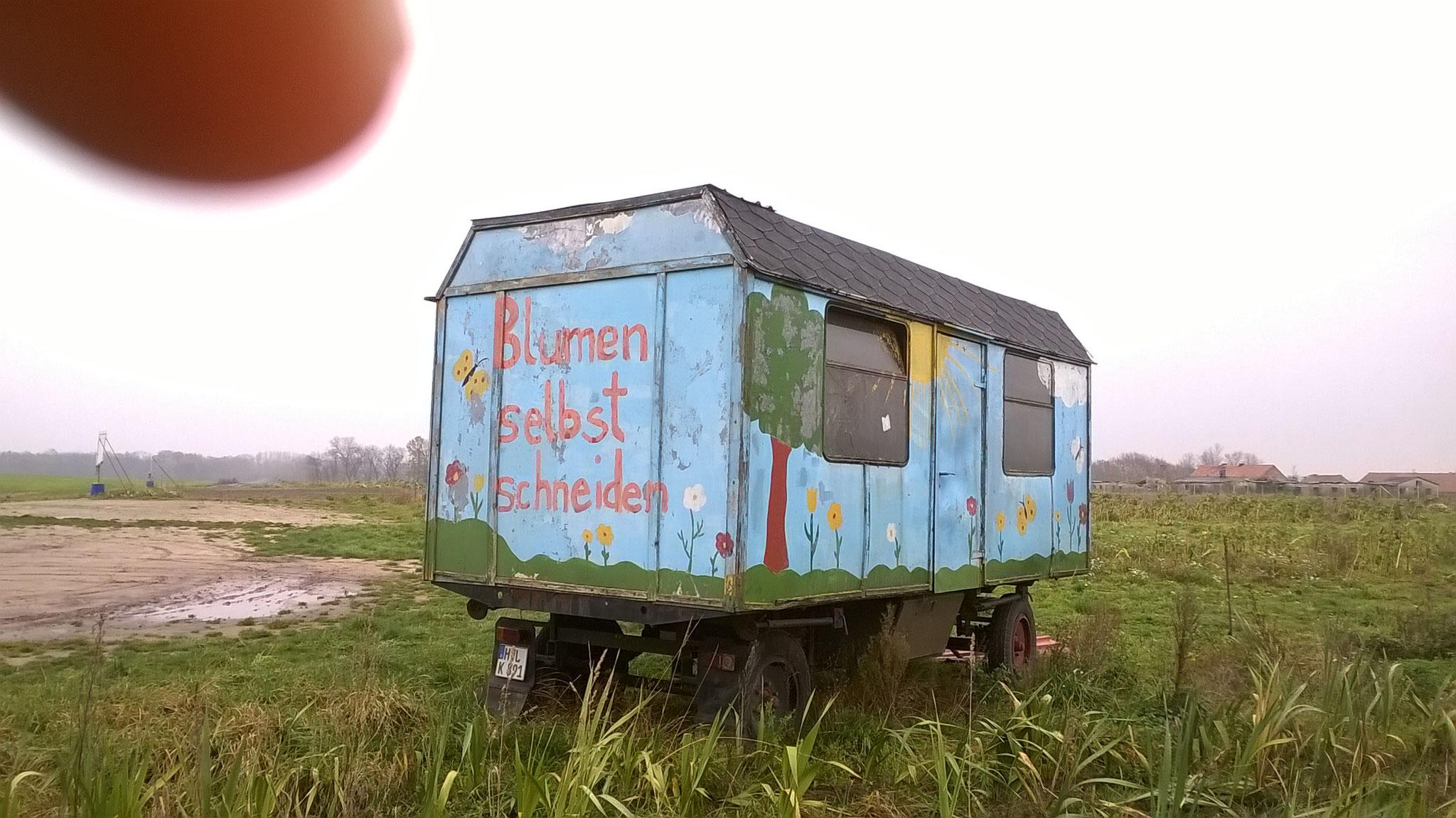 """Verwitterte Zirkuswagen auf kahlen Feldern laden zum """"Blumen selber Pflücken"""" ein. Ein schwarz gewordenes Schwertlilienfeld liegt kreuz und quer"""