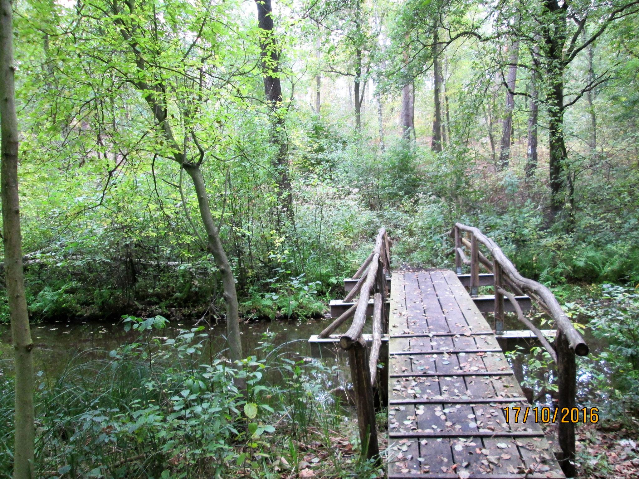 ... im Zauberwald zu sein, wo Märchen...