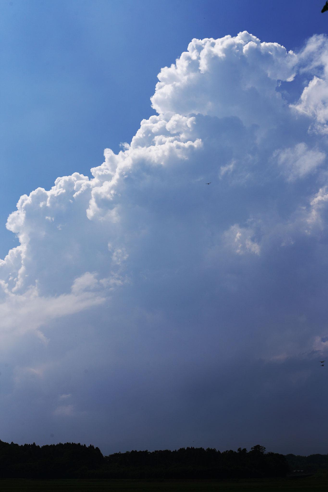 夏らしい積乱雲登場。会社はこのあと大雨に。(6/29 加工センター)