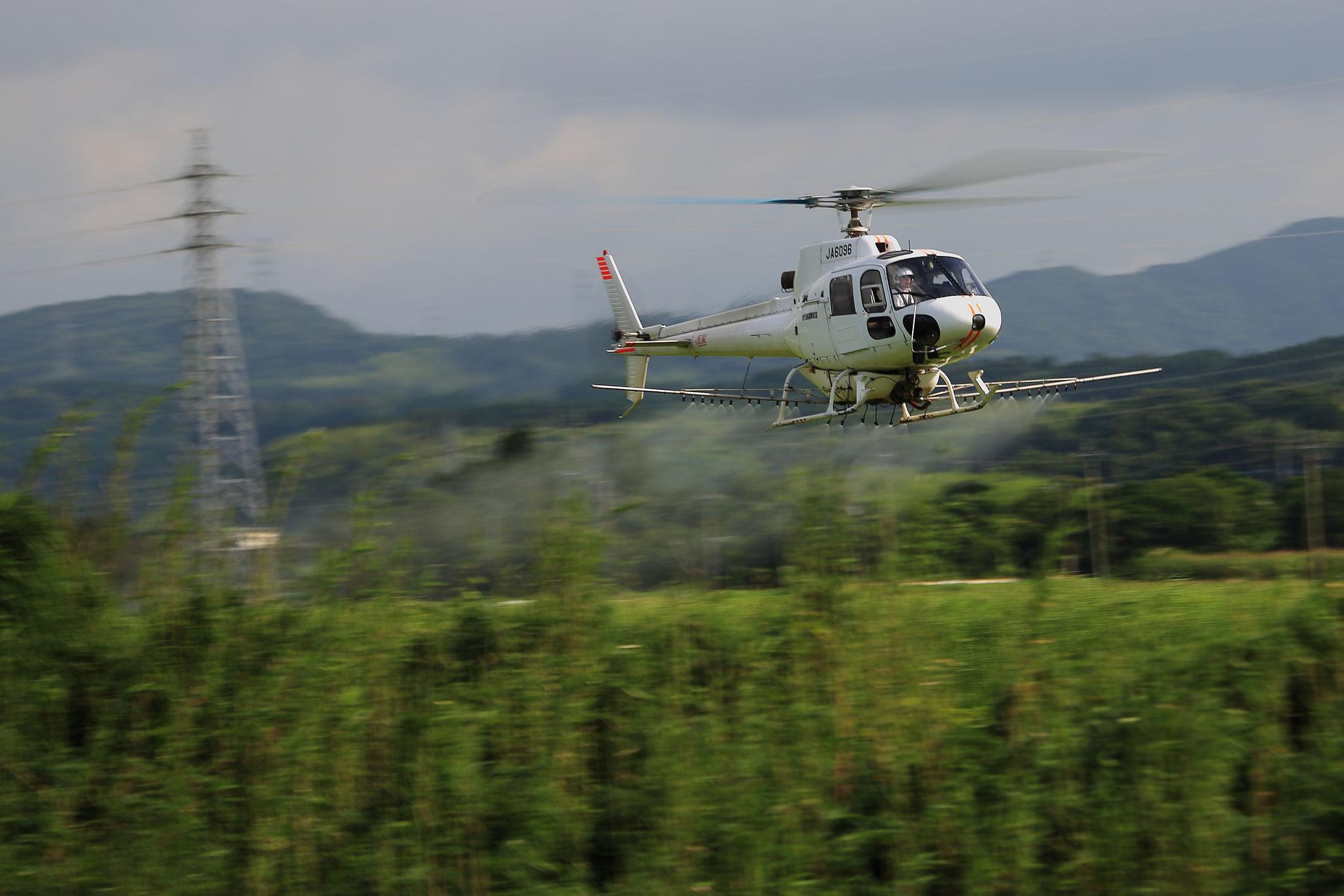 水田を飛ぶ航空防除のヘリコプター(7/14 串良町)