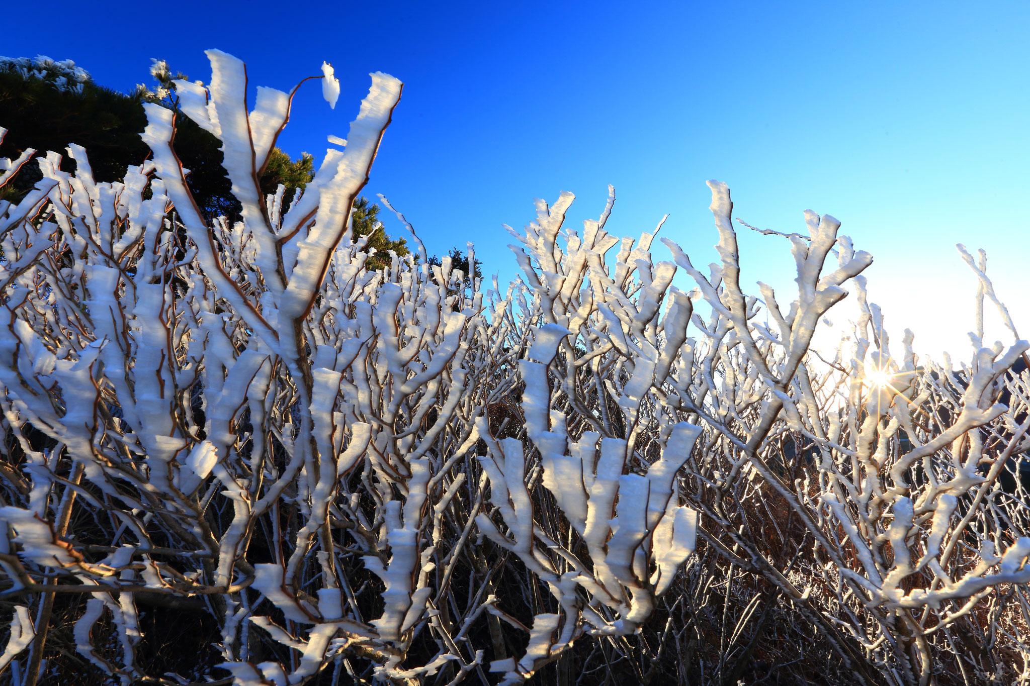 12/30 えびの高原白鳥山山頂の木々が樹氷を見せた