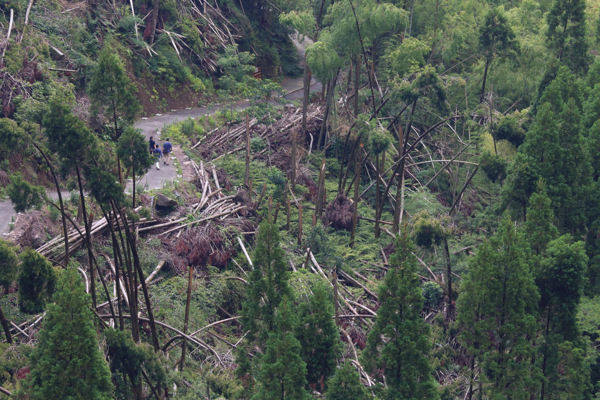 台風被害の残る雄川の滝遊歩道(6/24 南大隅町)