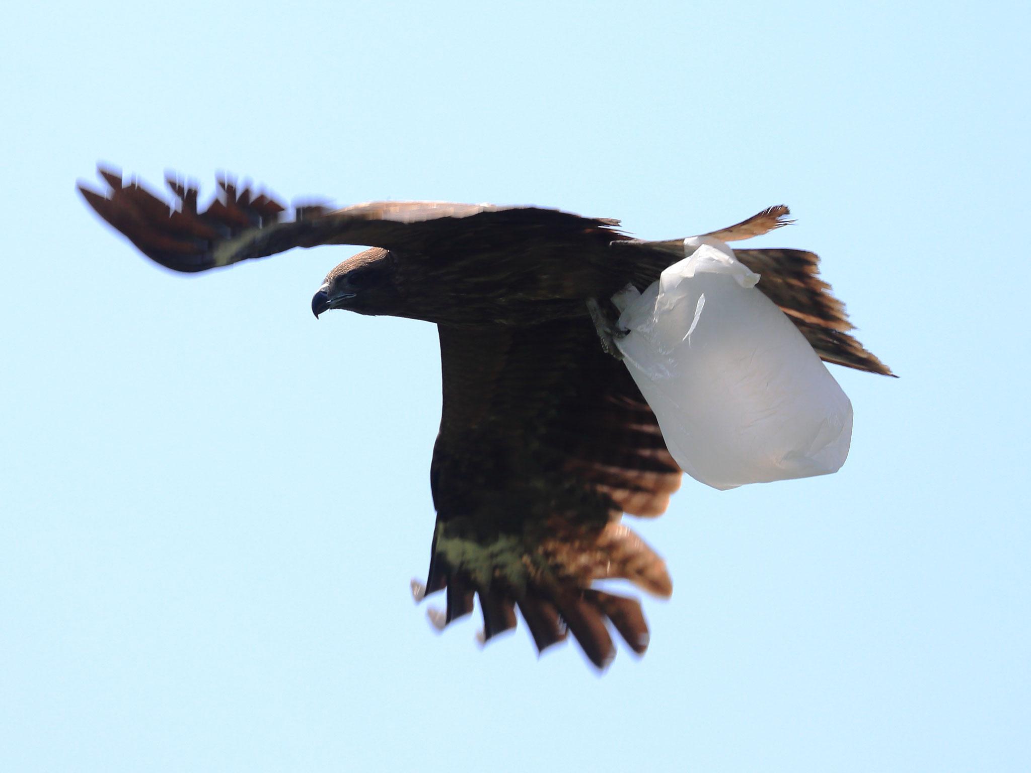 エコバック?いいえ、ゴミ袋です。空の。