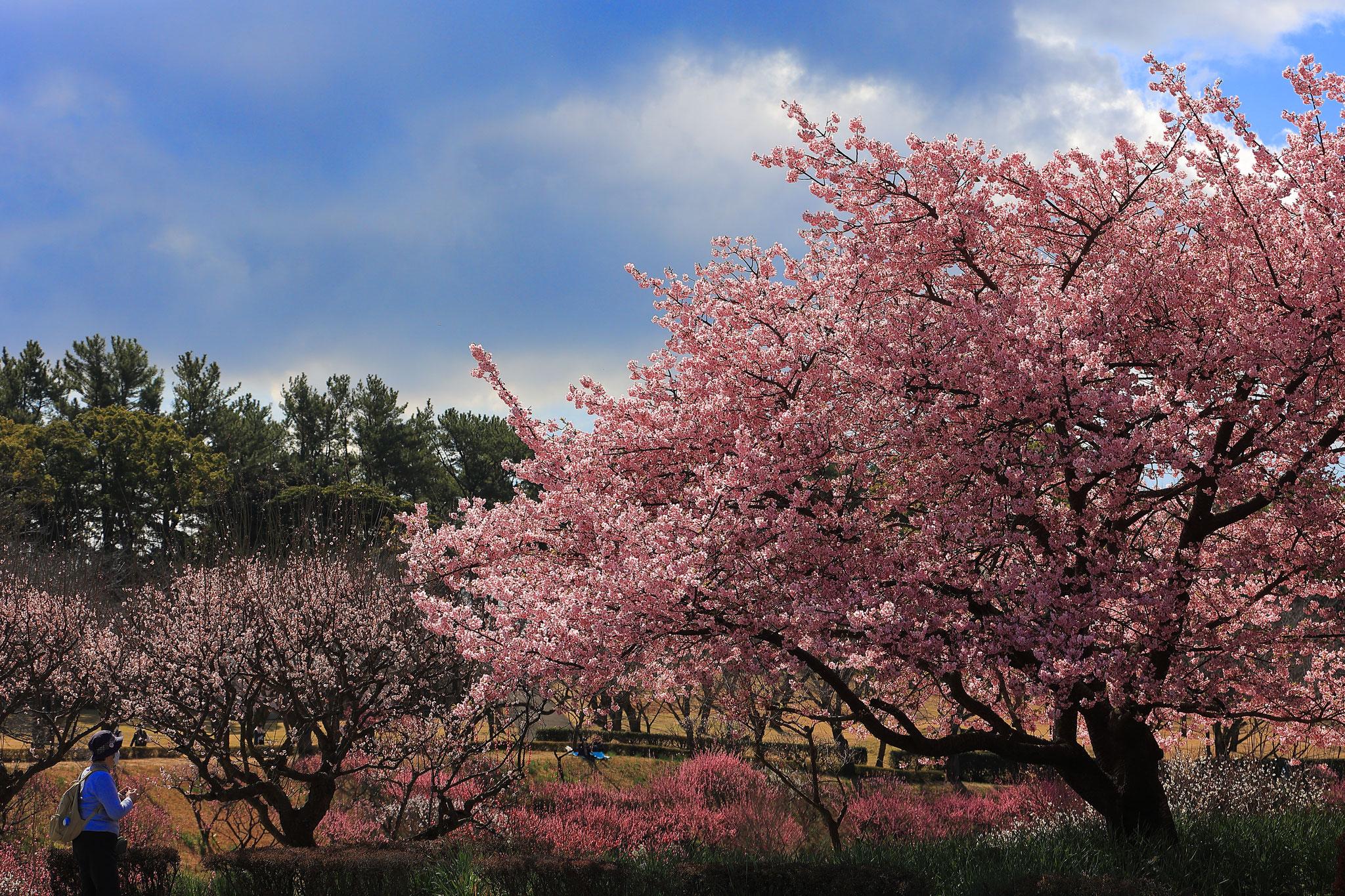 春の香り(2/13 鹿児島市)