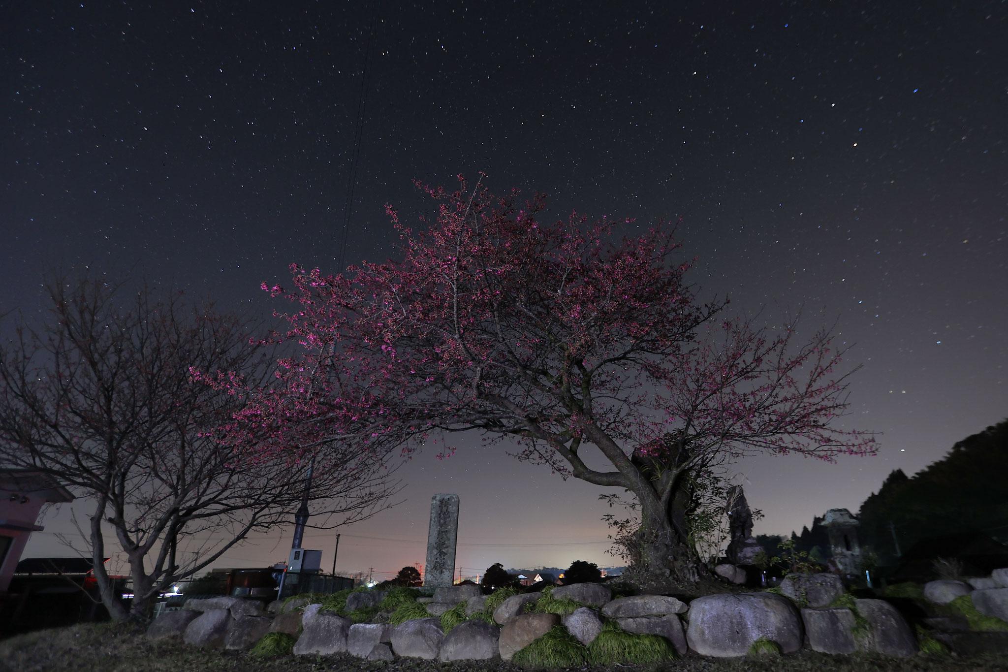 桜夜バージョン(2/7 肝付町)