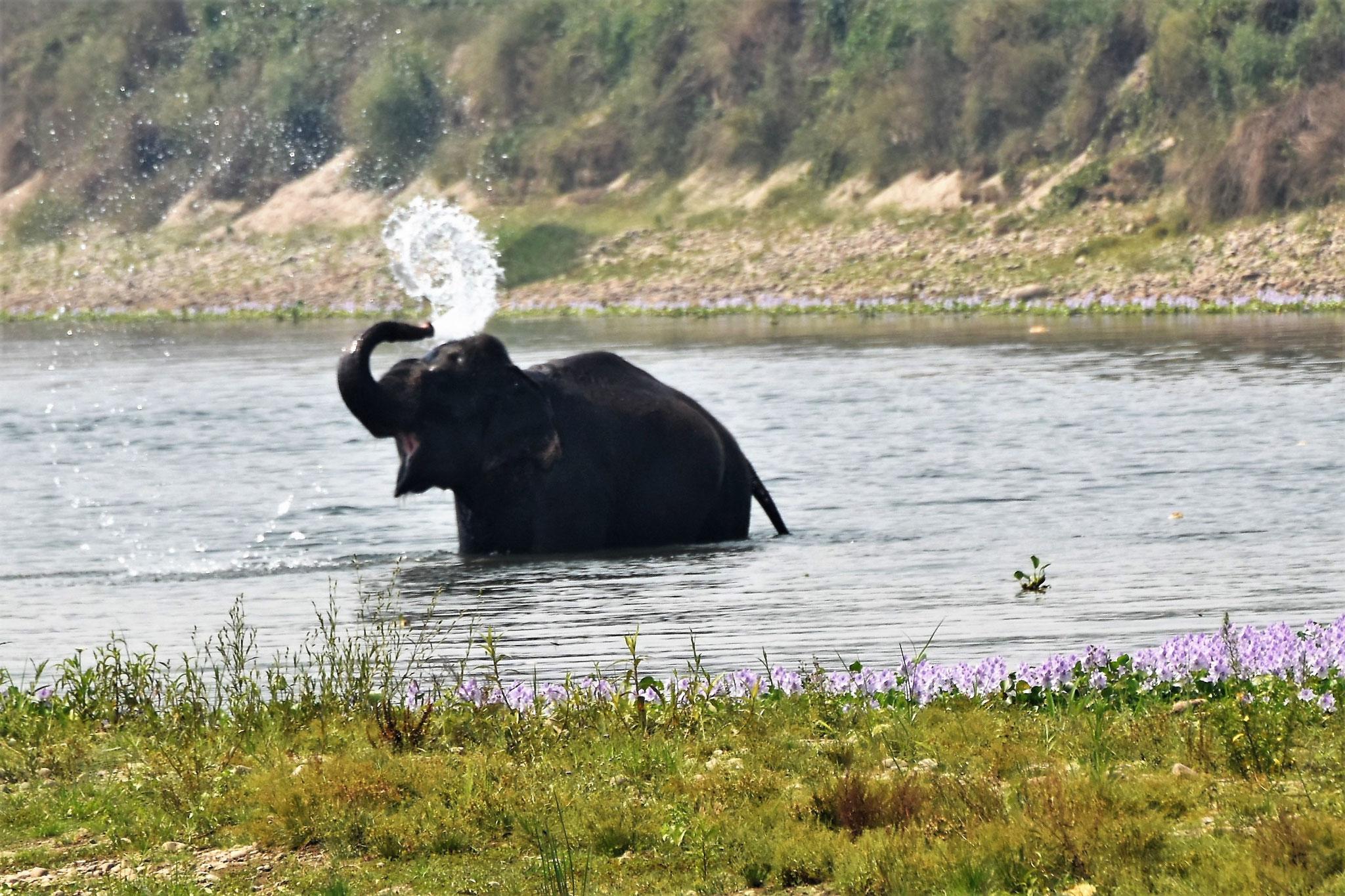 Elefantenbaden im Fluss