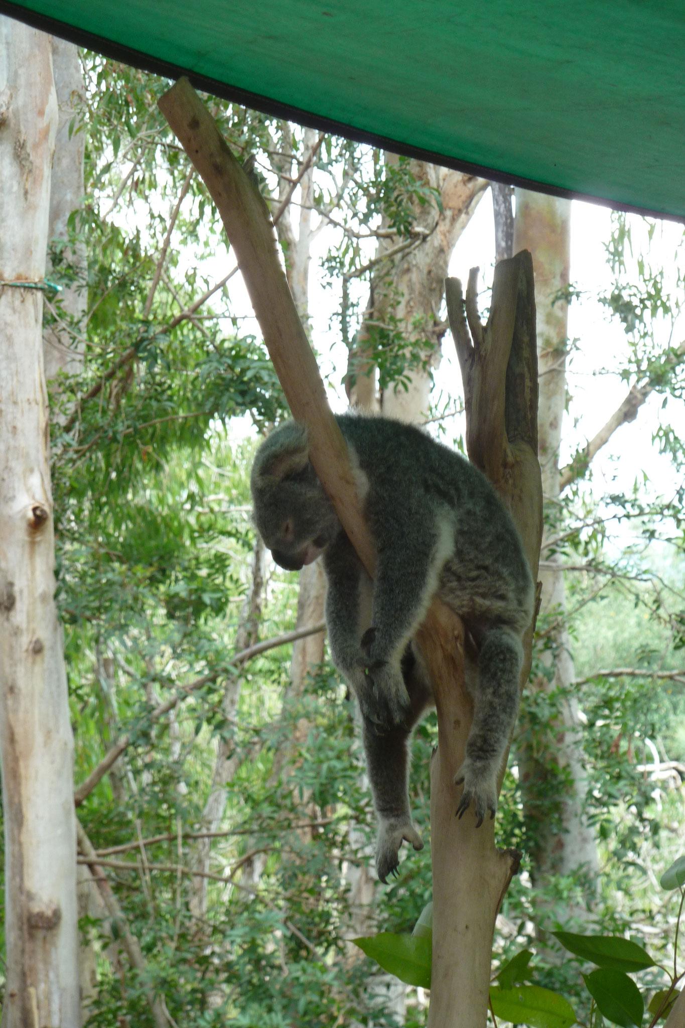 Australien - ein Ausflug zum Zoo