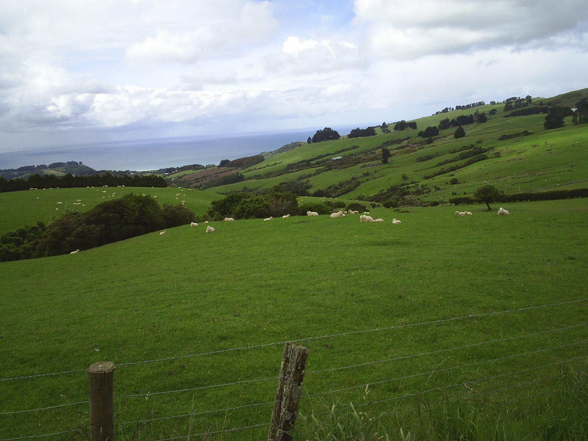 Neuseeland - Lena und Roman machen eine Tour mit dem Cabriolet