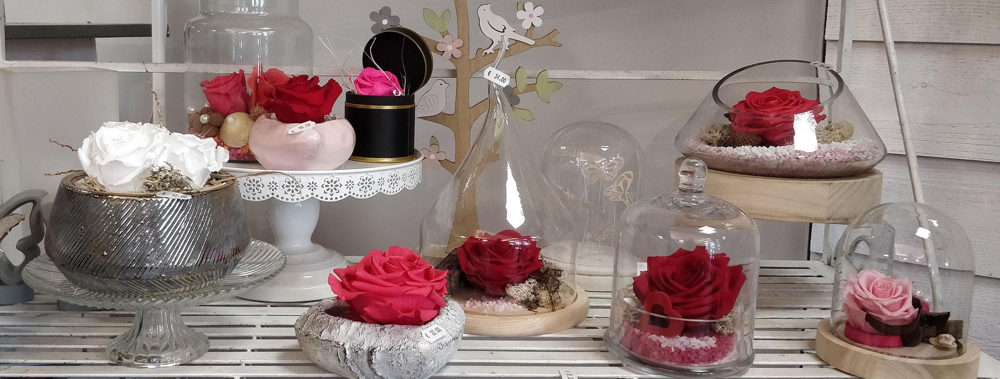 Roses éternelles La Rose des Vents