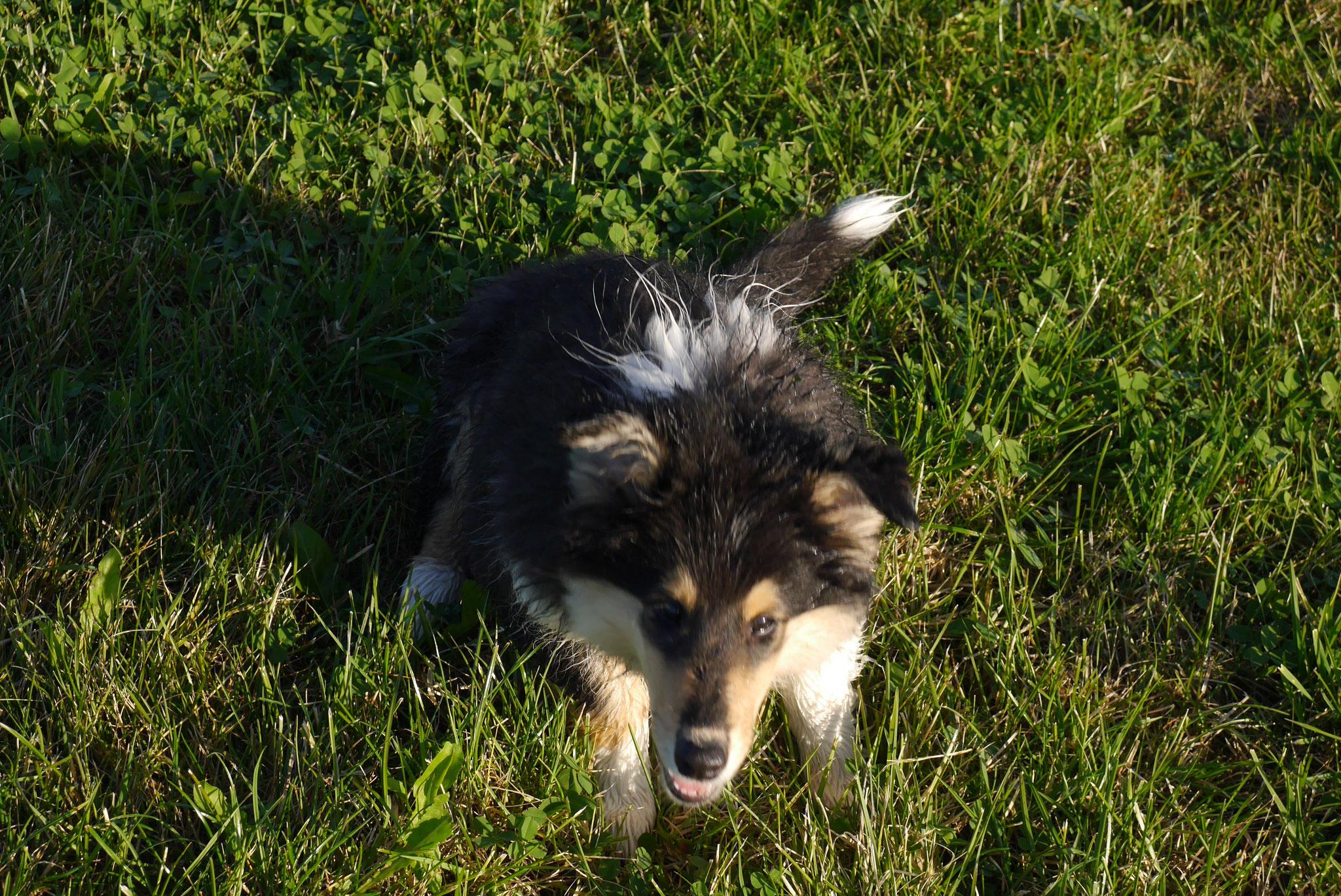 Bessy mit 16 Wochen