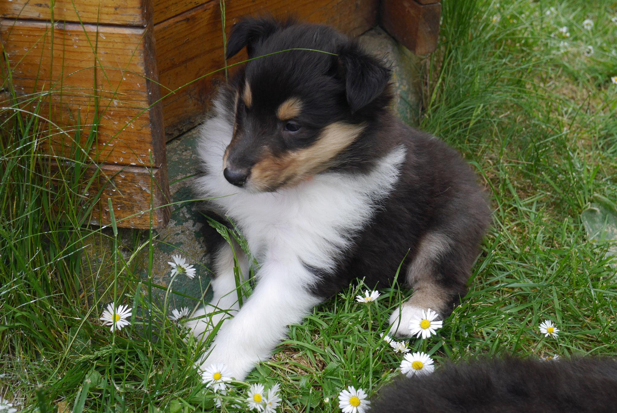Cora mit 5 Wochen