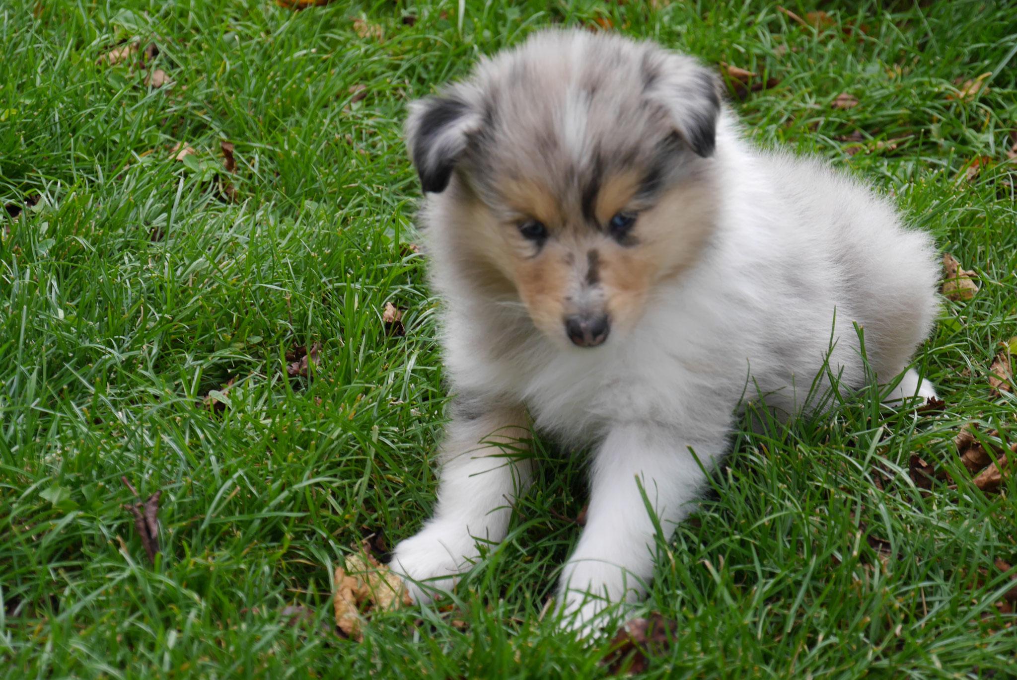 Buster mit 6 Wochen