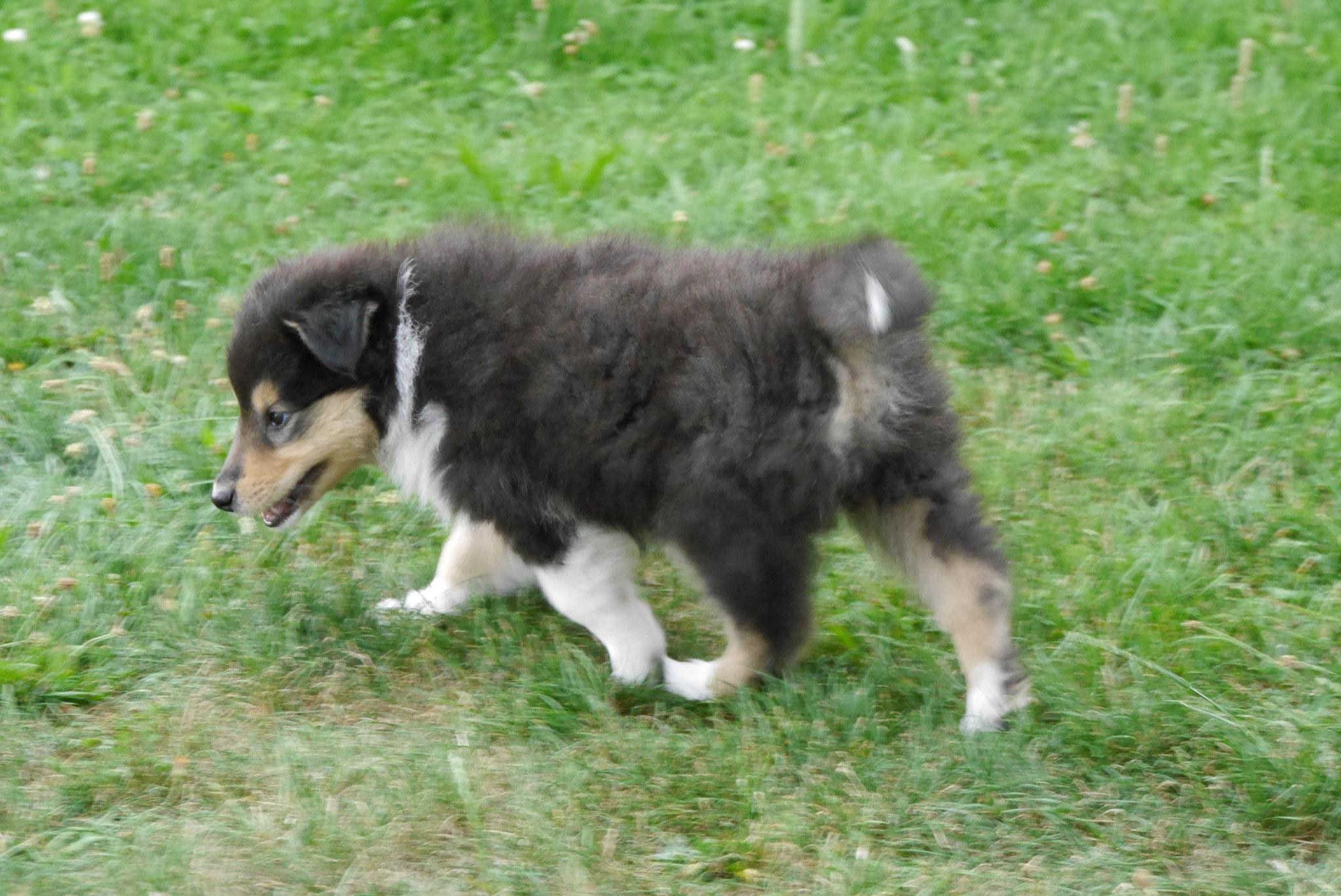 Fiona mit 7 Wochen
