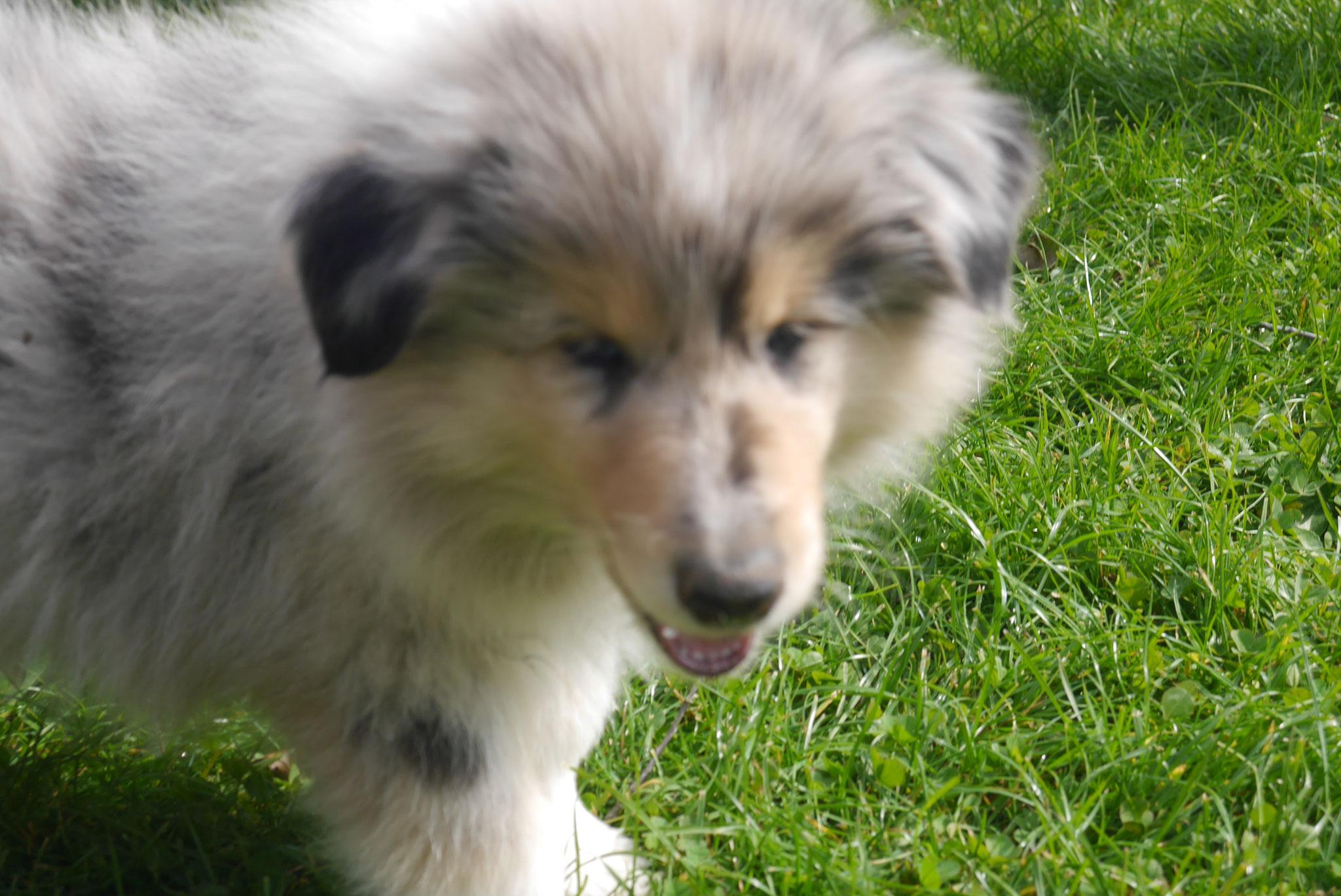 Buster mit 9 Wochen