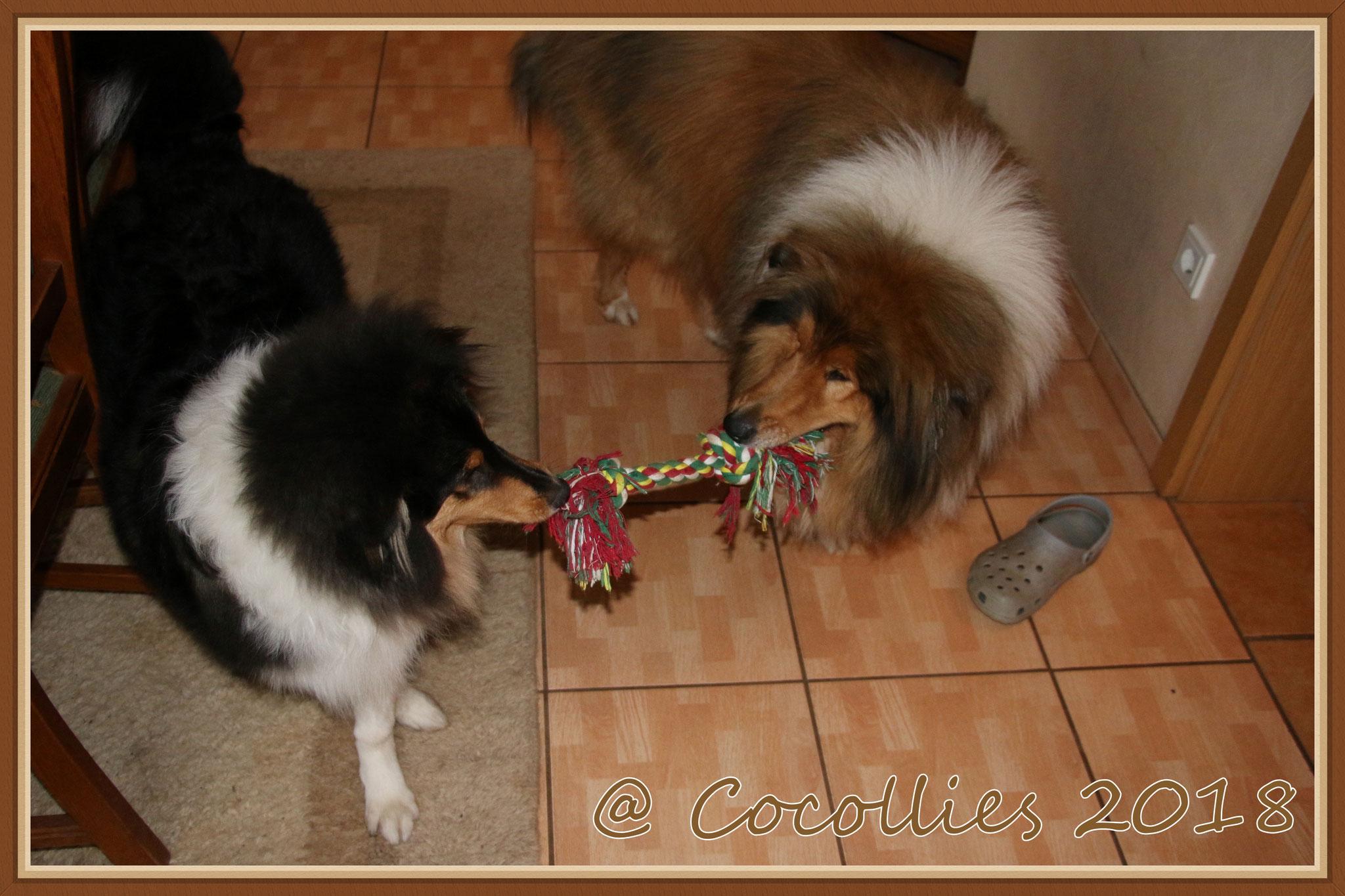 Brenda und Teddy beim spielen