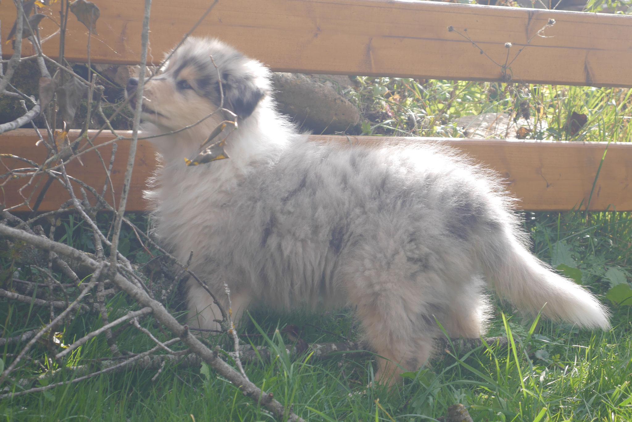 Buster mit 10 Wochen