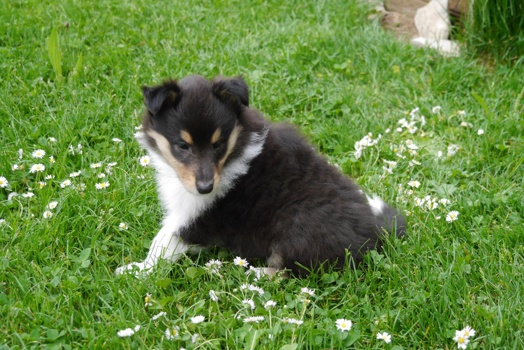 Cora mit 6 Wochen