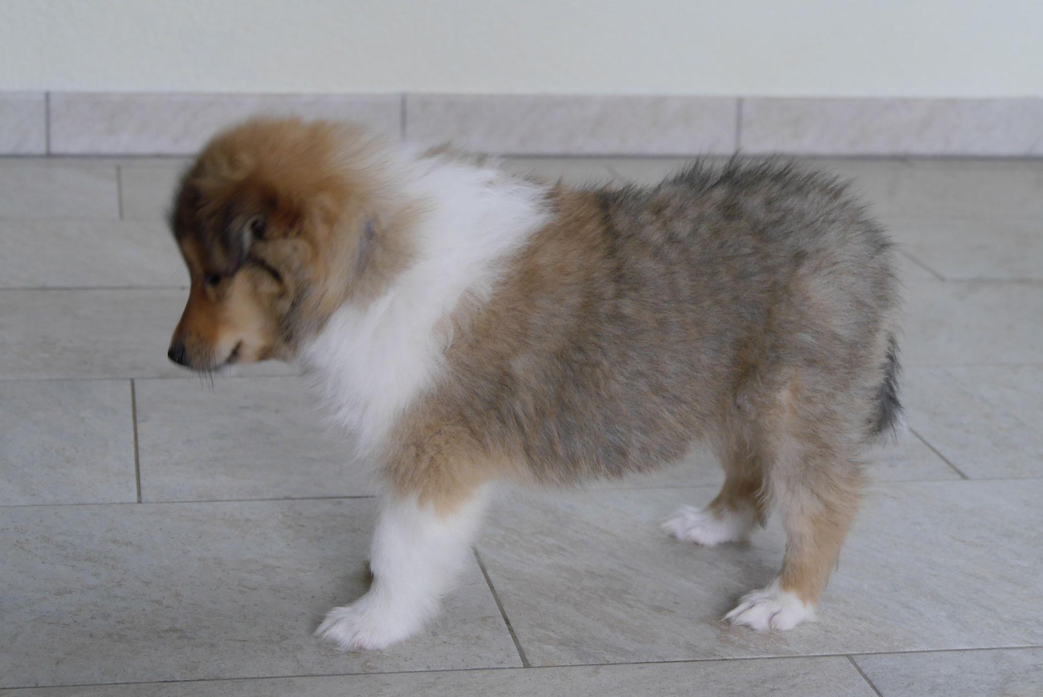 Enzo mit 7 Wochen
