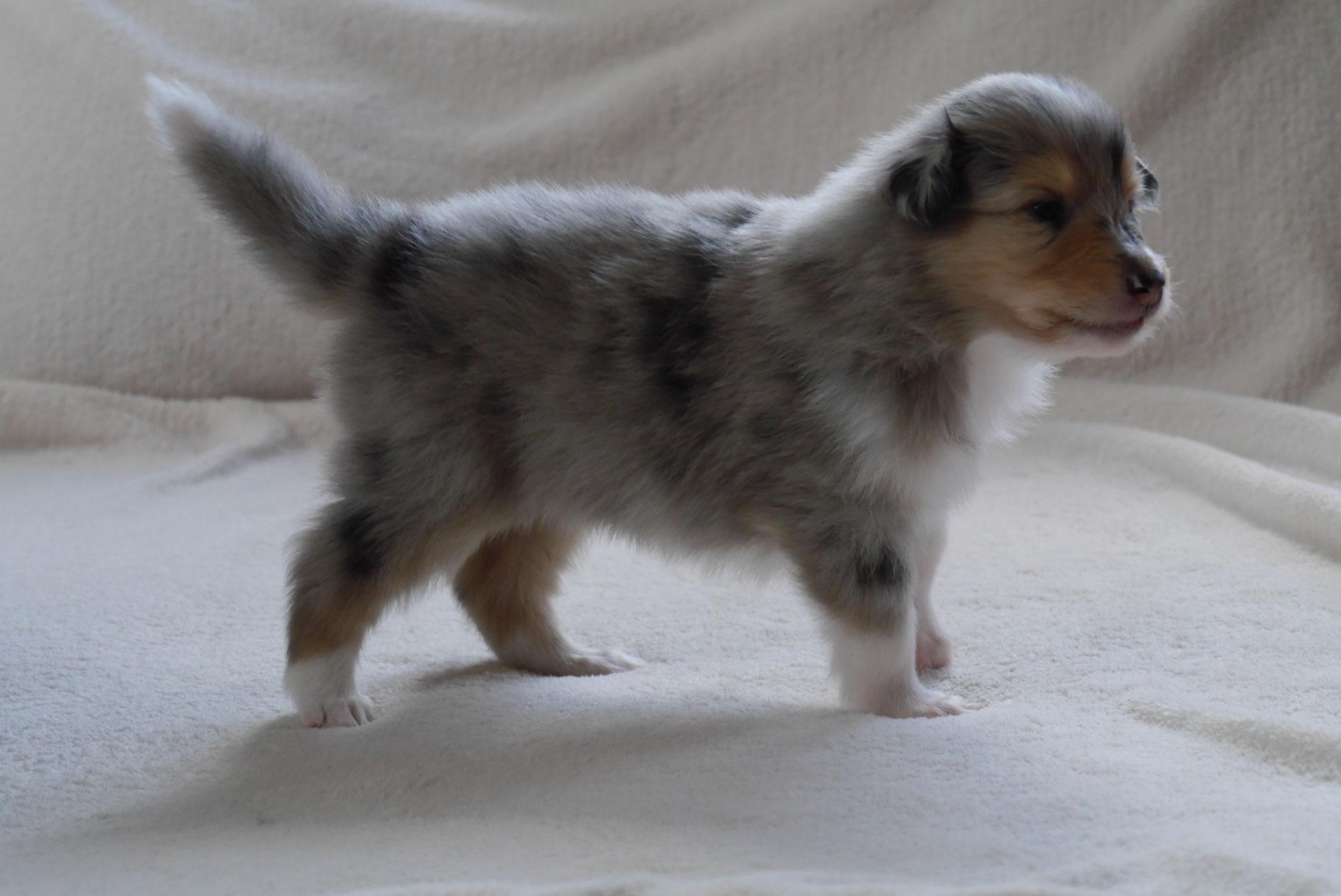 Buster mit 4 Wochen