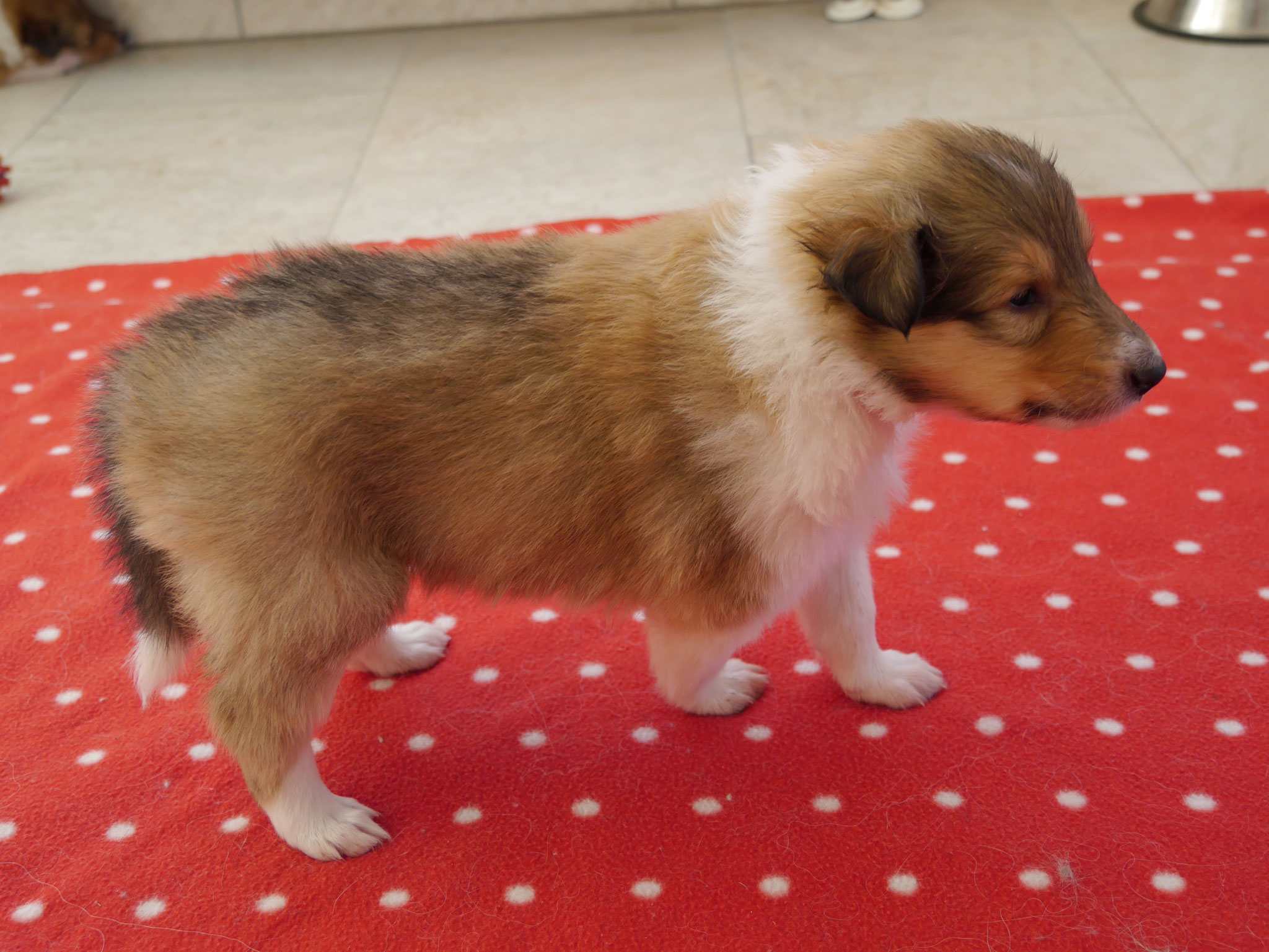 Daisy mit 4 Wochen